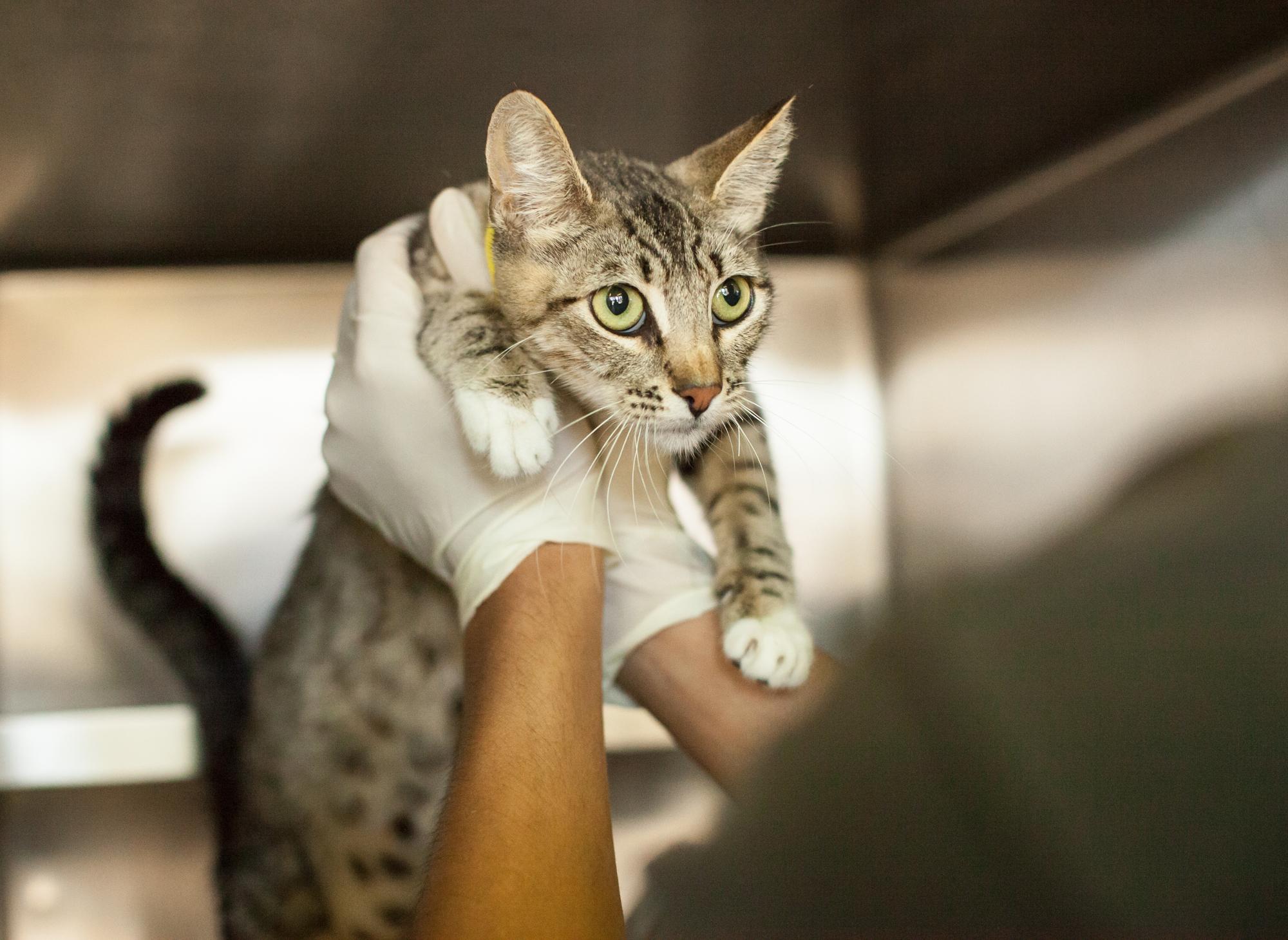 033_animal-photography-cats-dogs-volunteer_MG_5136.jpg