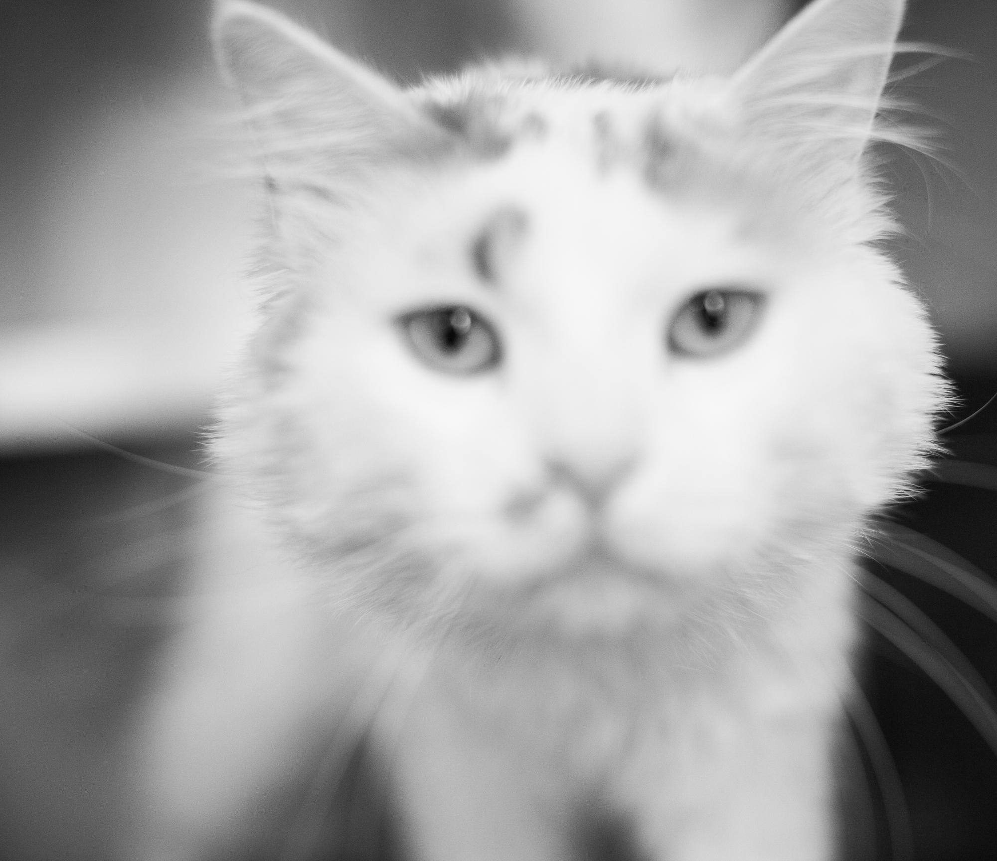 040_animal-photography-cats-dogs-volunteer_MG_8469.jpg