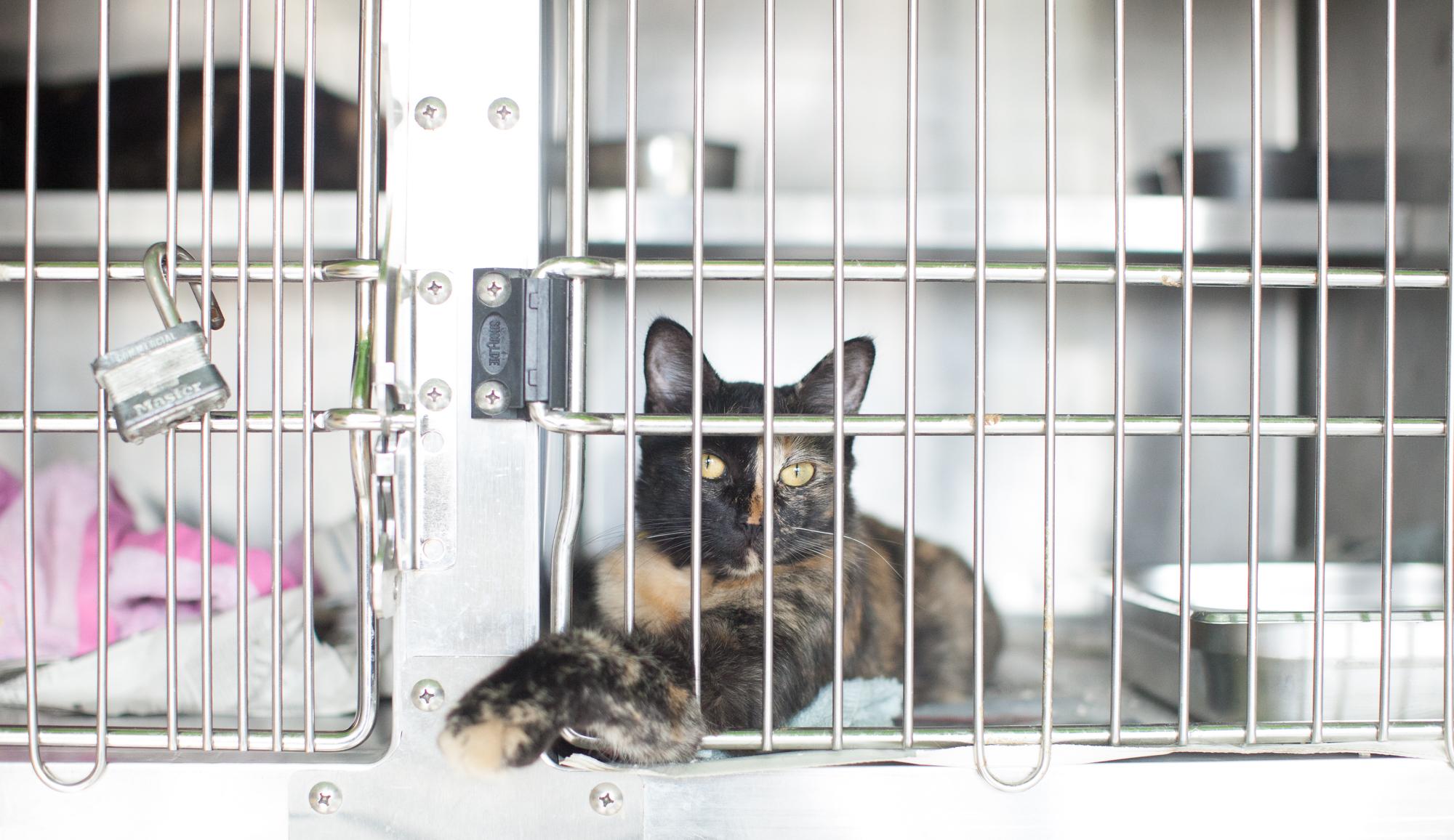 041_animal-photography-cats-dogs-volunteer_MG_8893.jpg