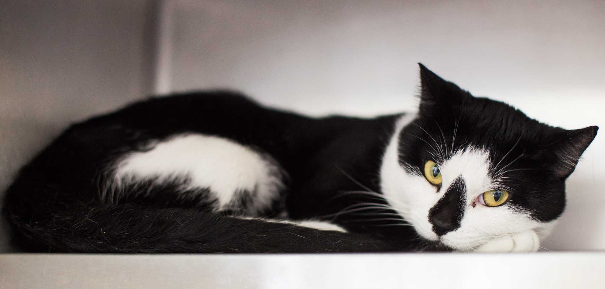 054_animal-photography-cats-dogs-volunteer_MG_8680.jpg