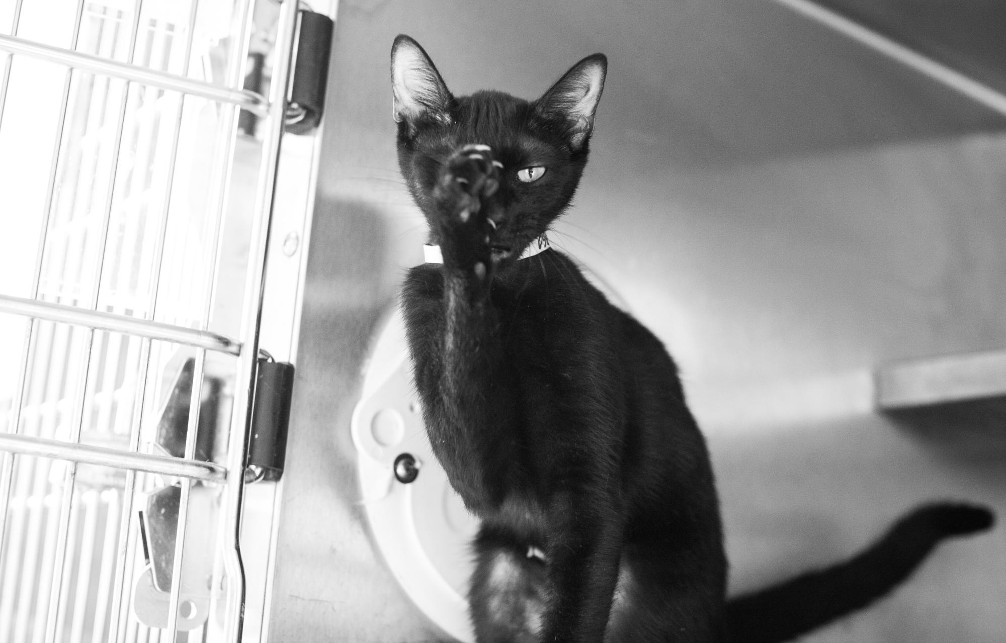 058_animal-photography-cats-dogs-volunteer_MG_8820.jpg