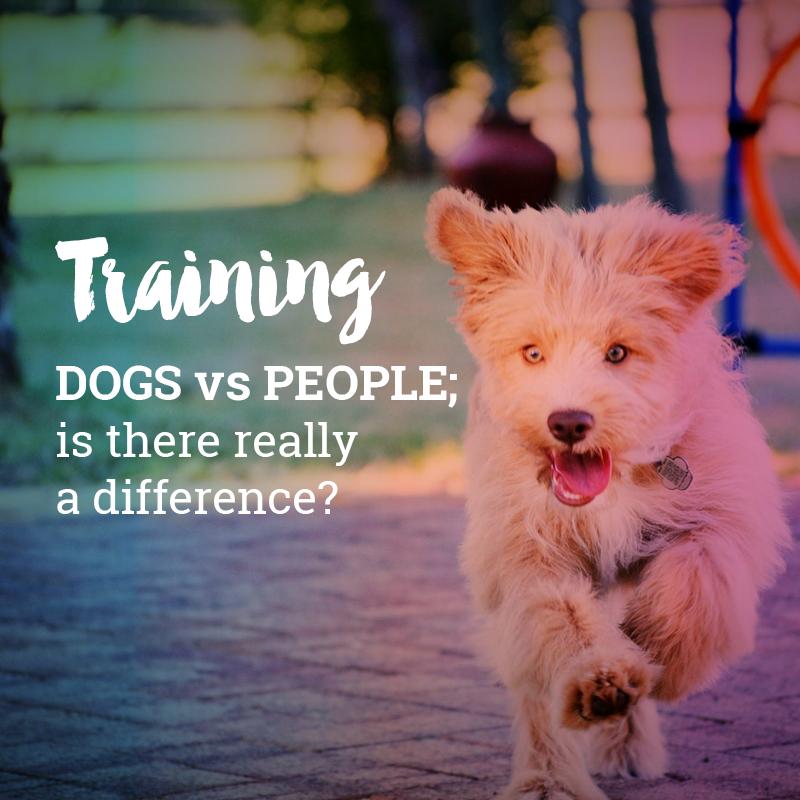Bentley - Training dogs vs people