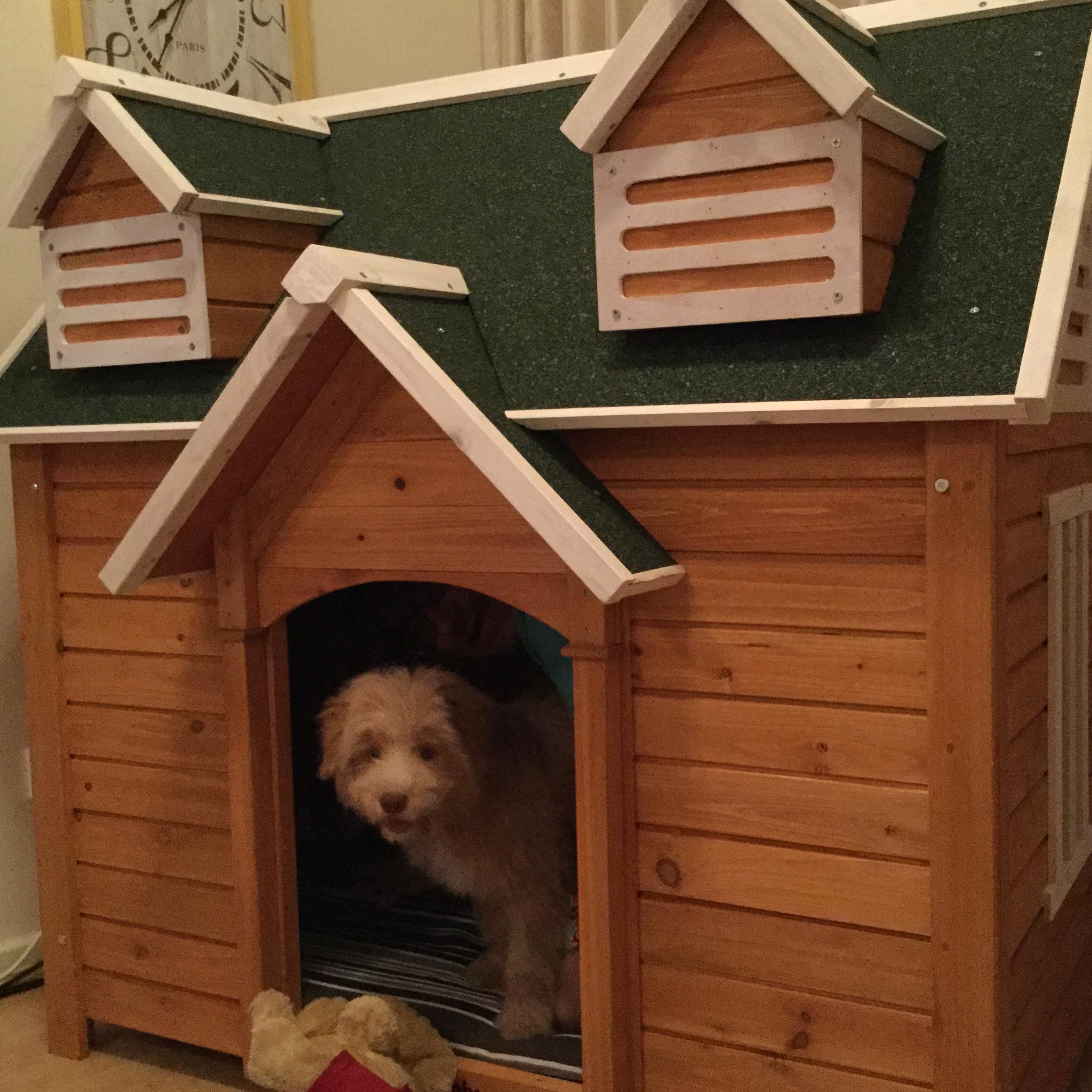 Bentley Dog House
