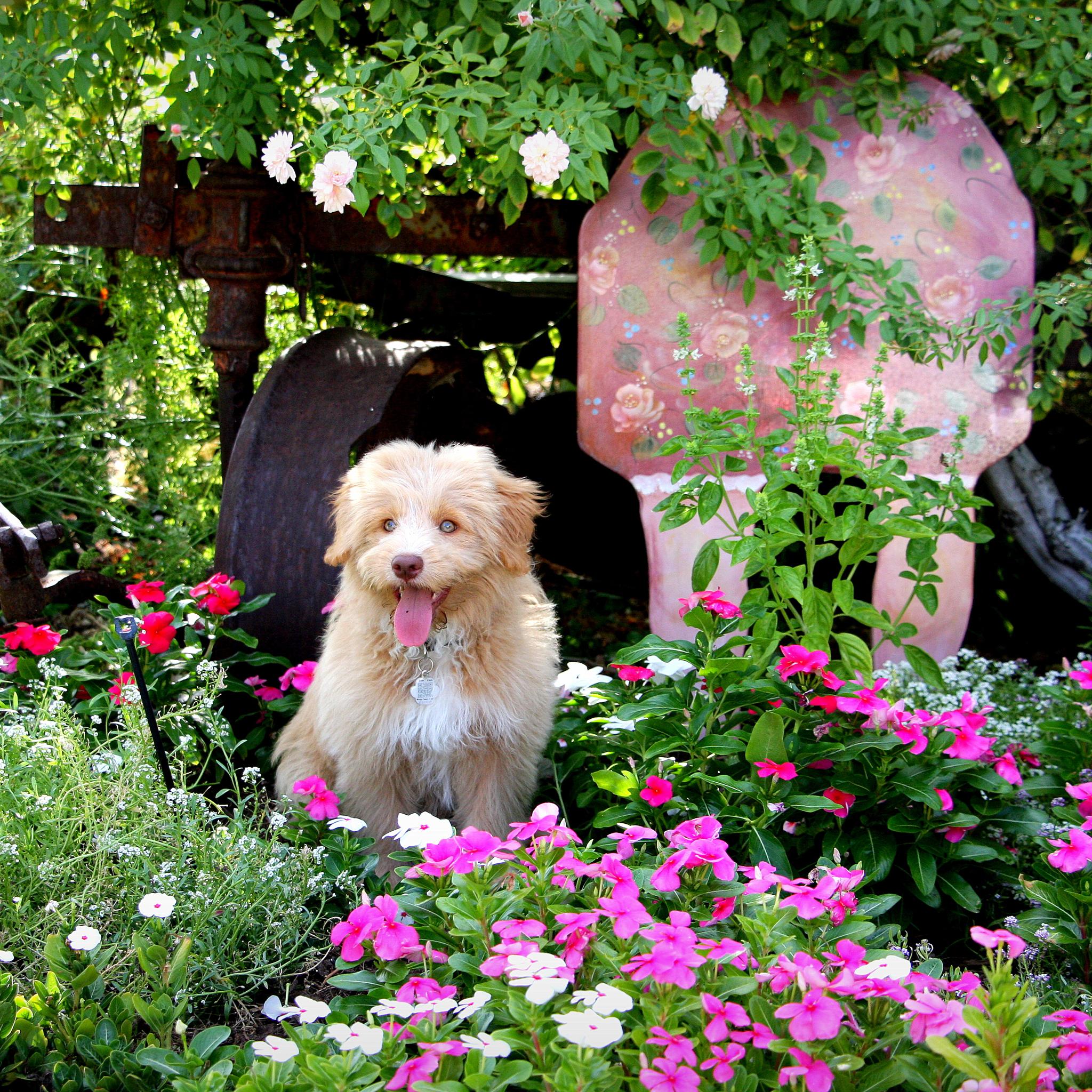 Bentley garden shot