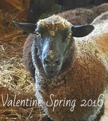 Valentine 2016.jpg