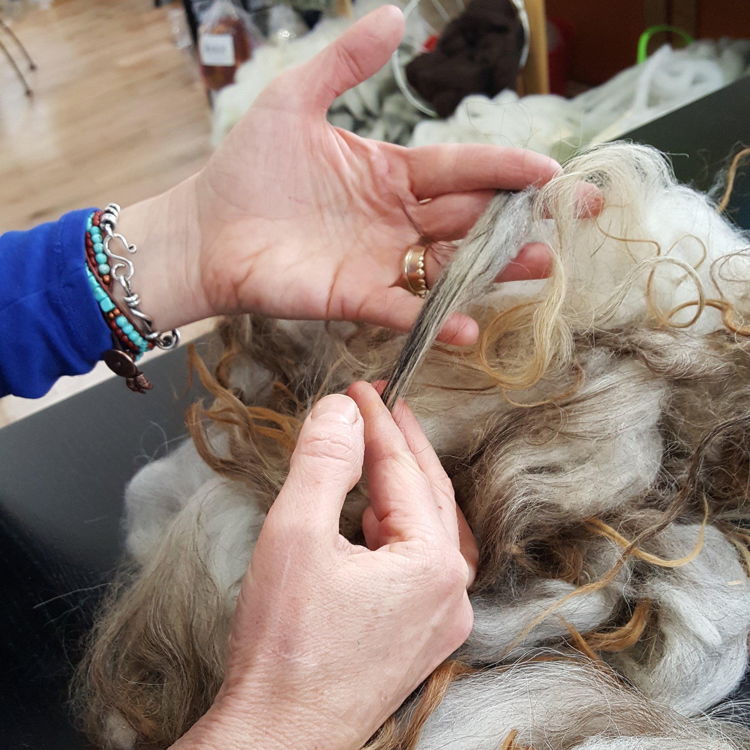 Gradiing Icelandic fleece from Shadow Hill Farm