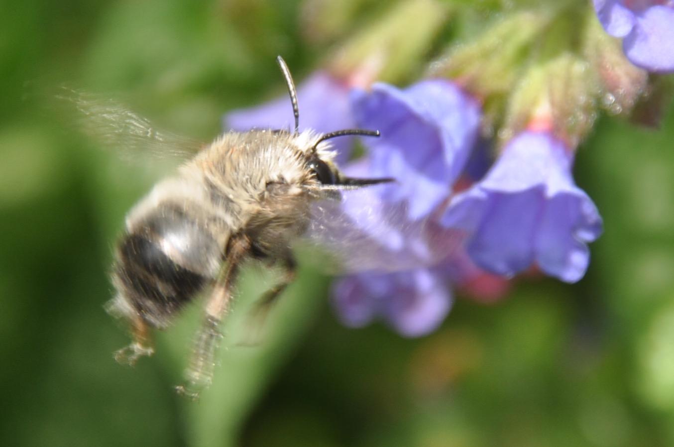 bee back1.jpg