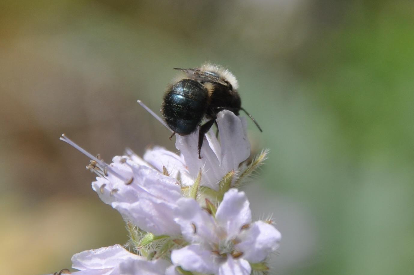 bee back4.jpg