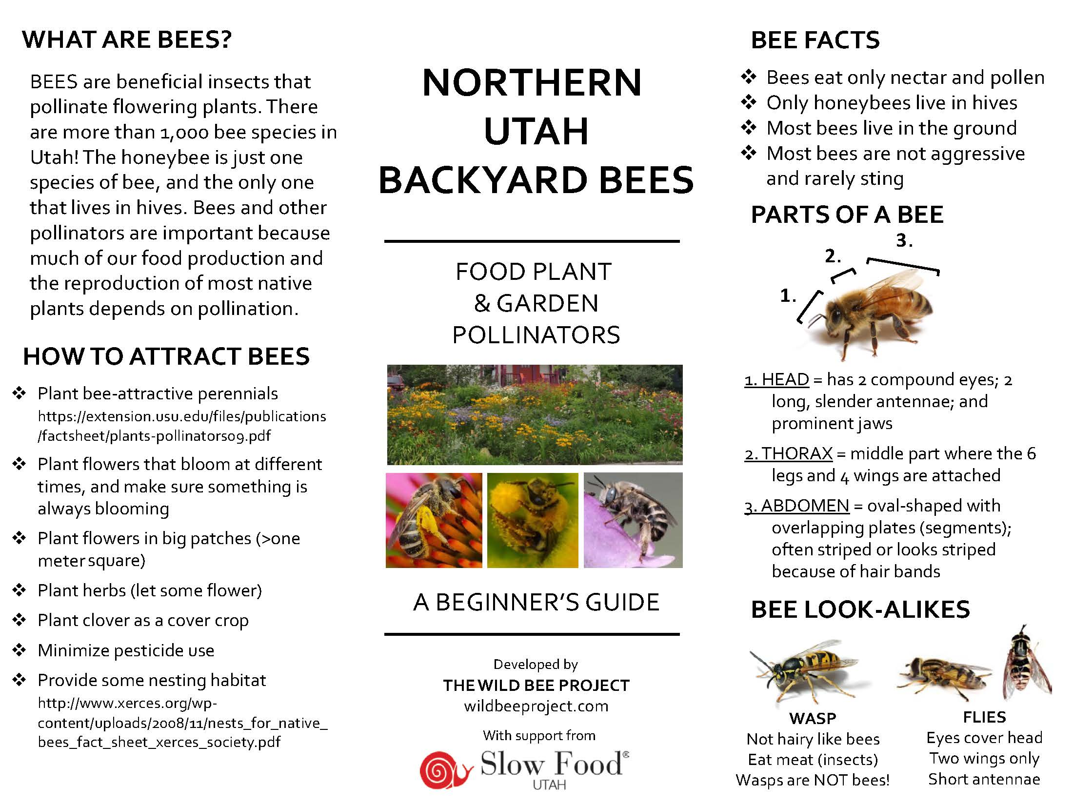 First page_ UT bee guide 5-9-16.jpg