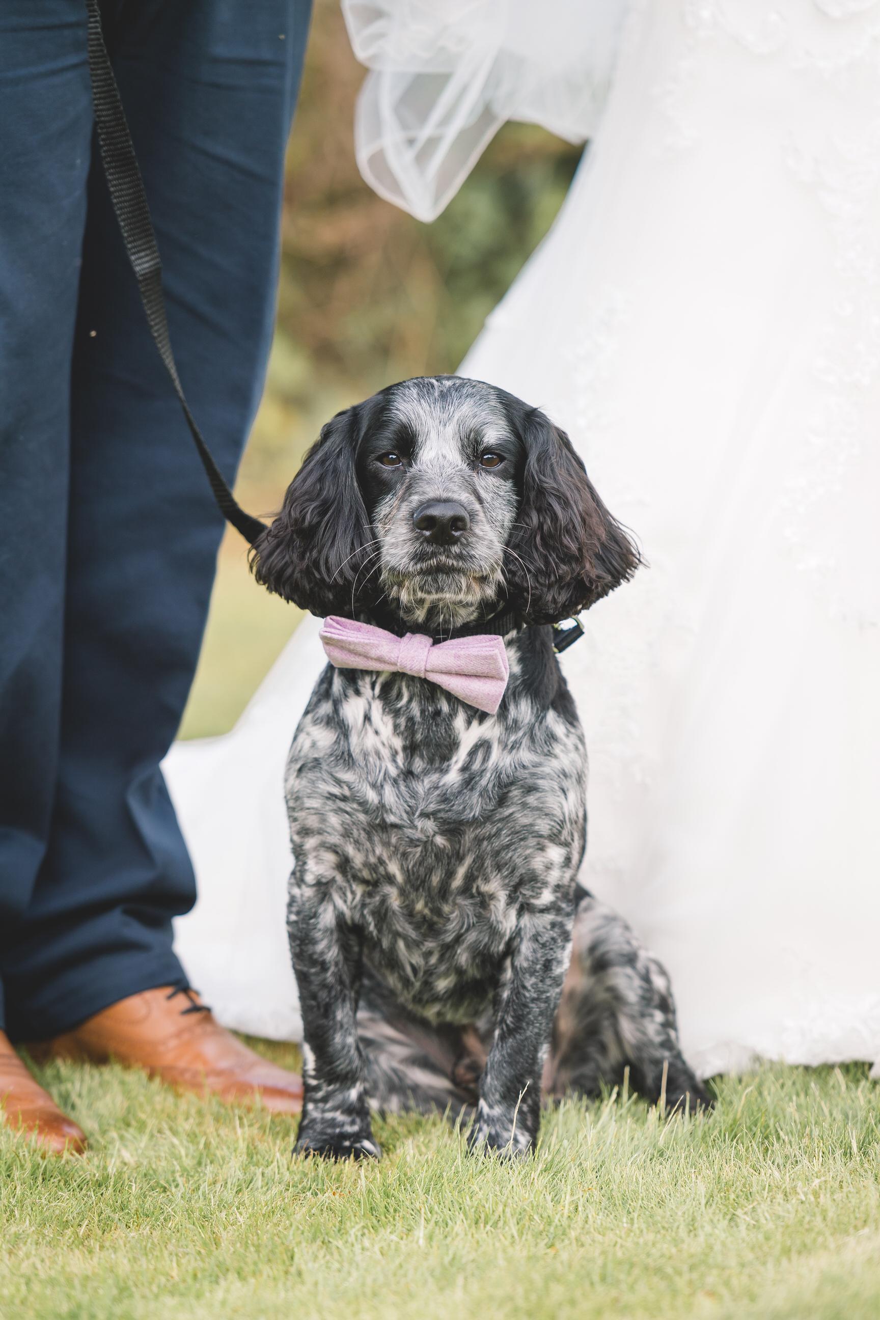 dog-wedding-leeds-wedding-photographer2.jpg