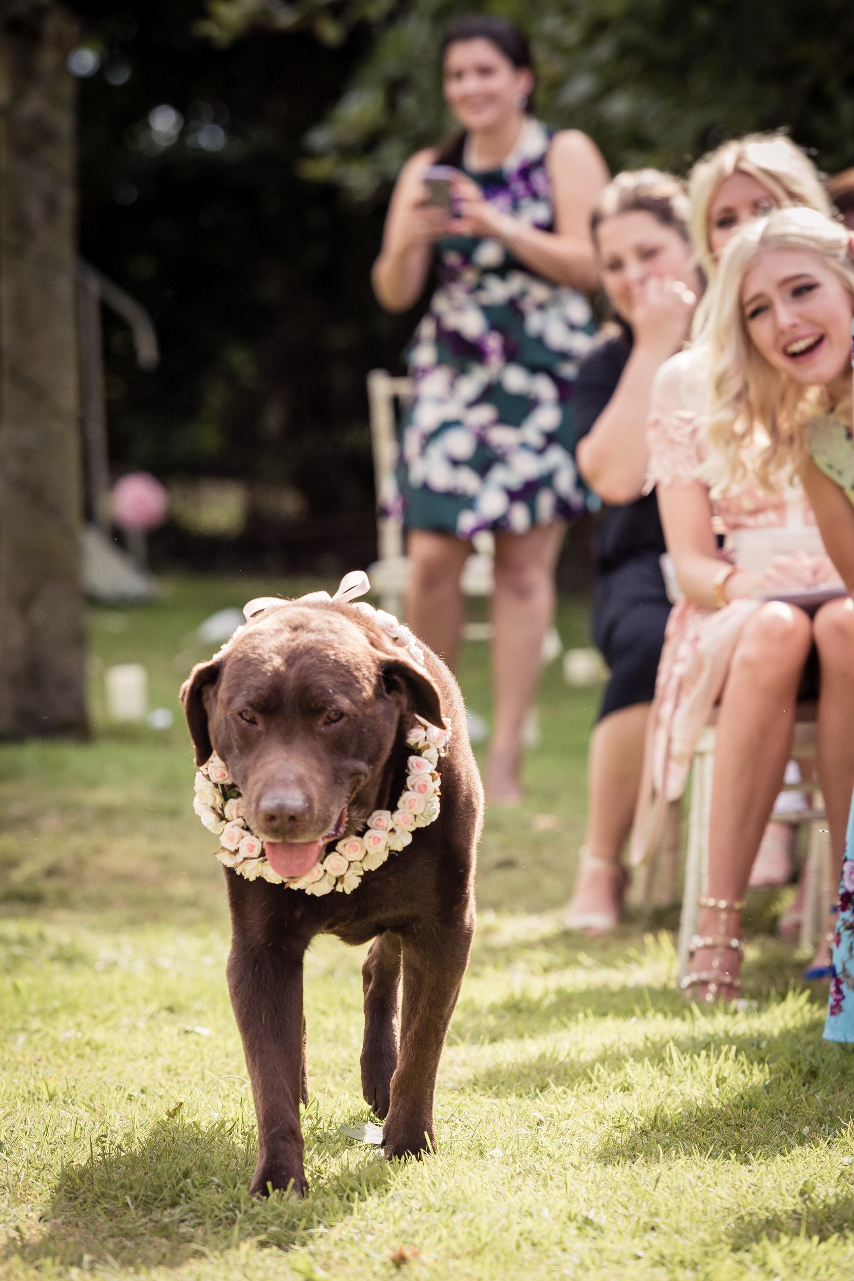 dog-wedding-leeds-wedding-photographer3.jpg