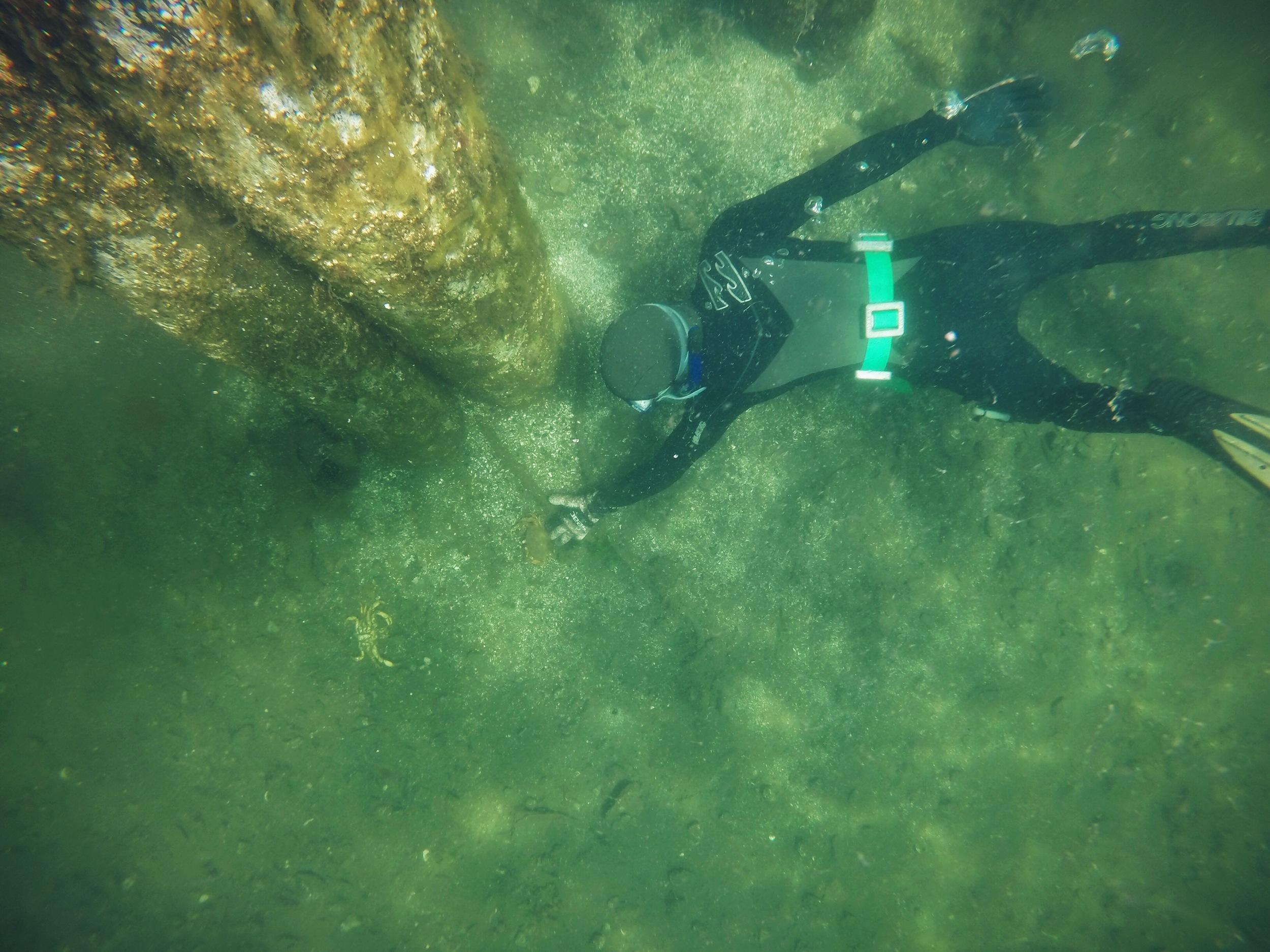 Freediving Amelia Wachtin