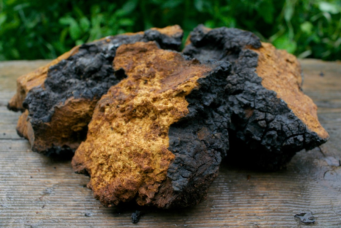 http://www.chagagrove.com/427905/buy-our-chaga/