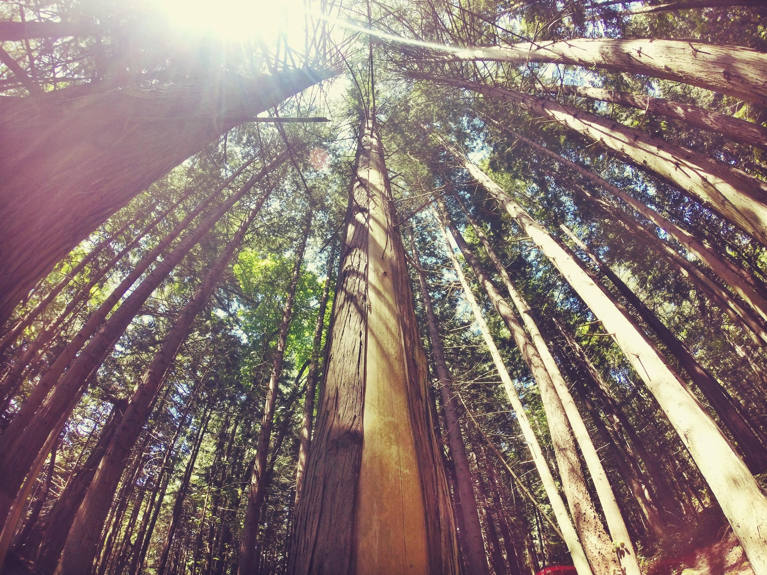 amelia wachtin forest
