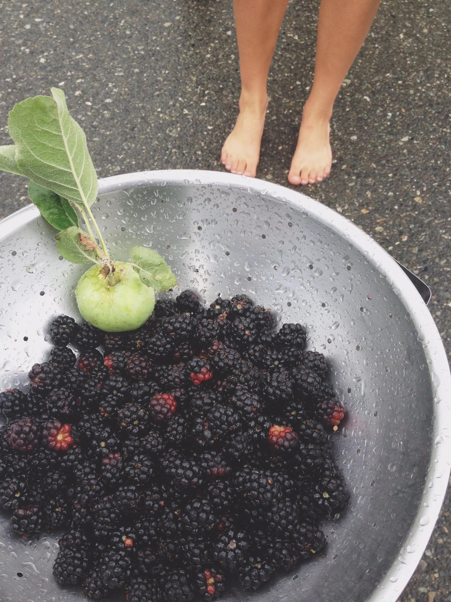 amelia wachtin blackberries