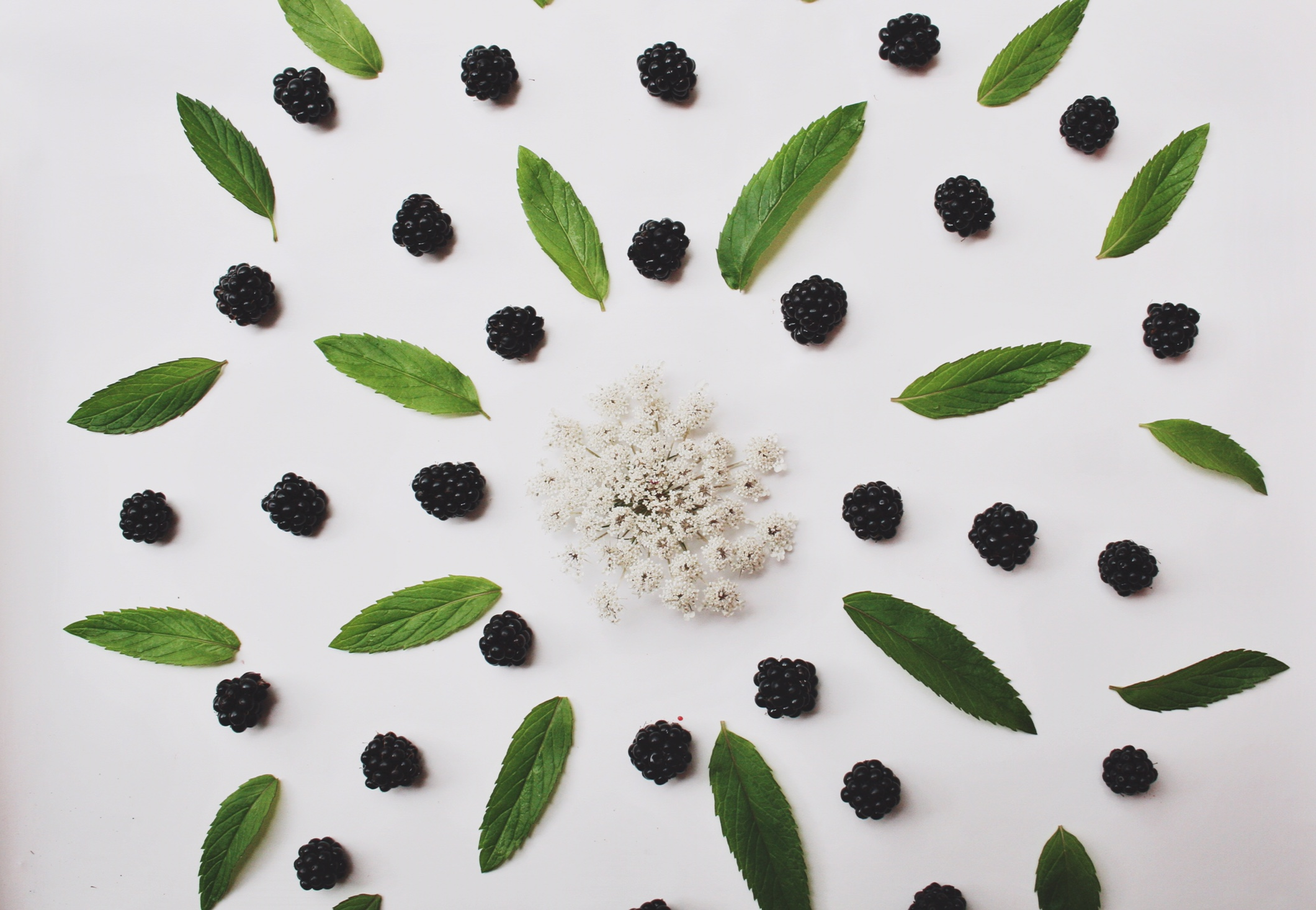 Queen Anne's lace, cowichan blackberries and mint from my moms garden