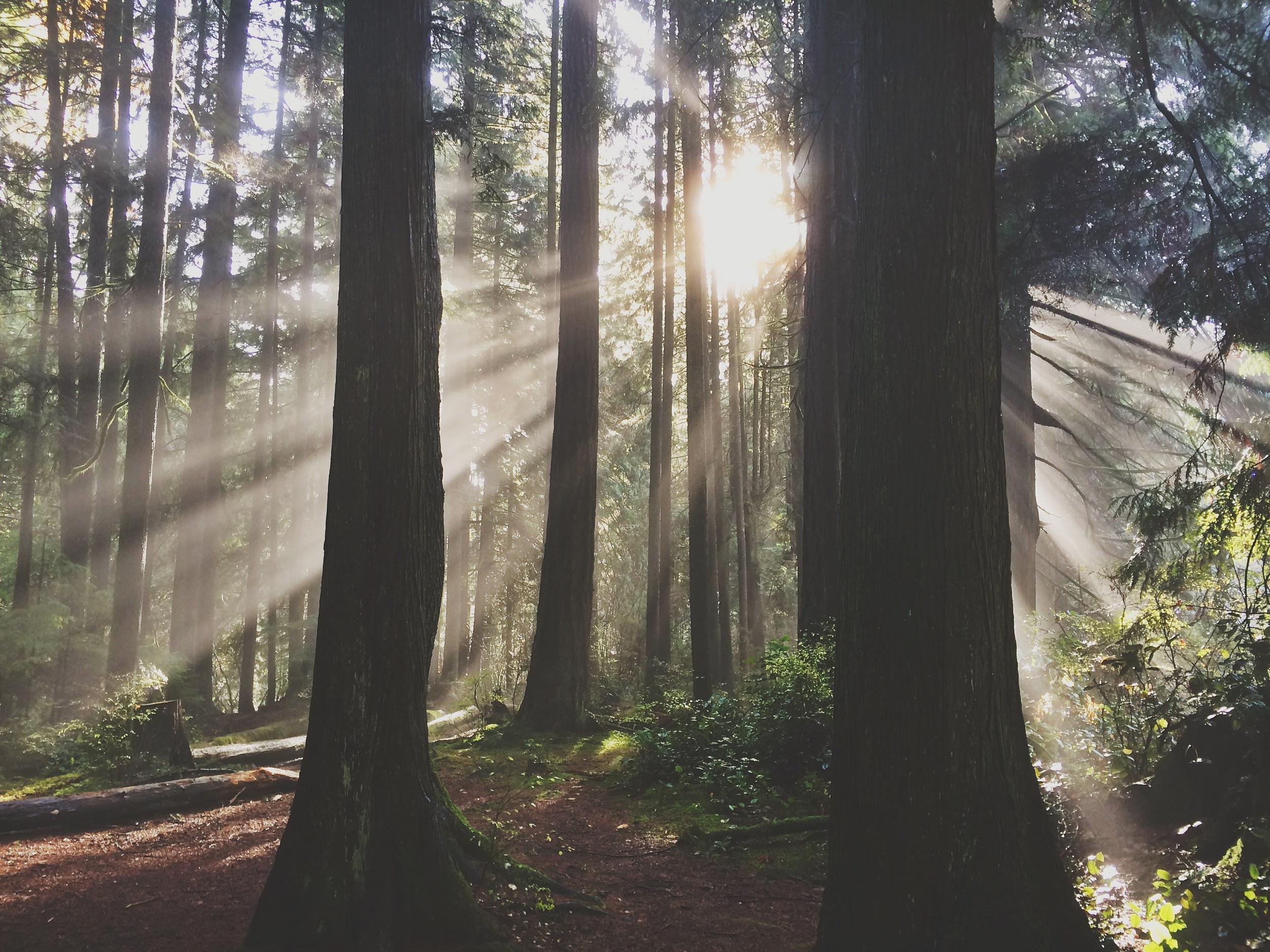 amelia wachtin forest bathing