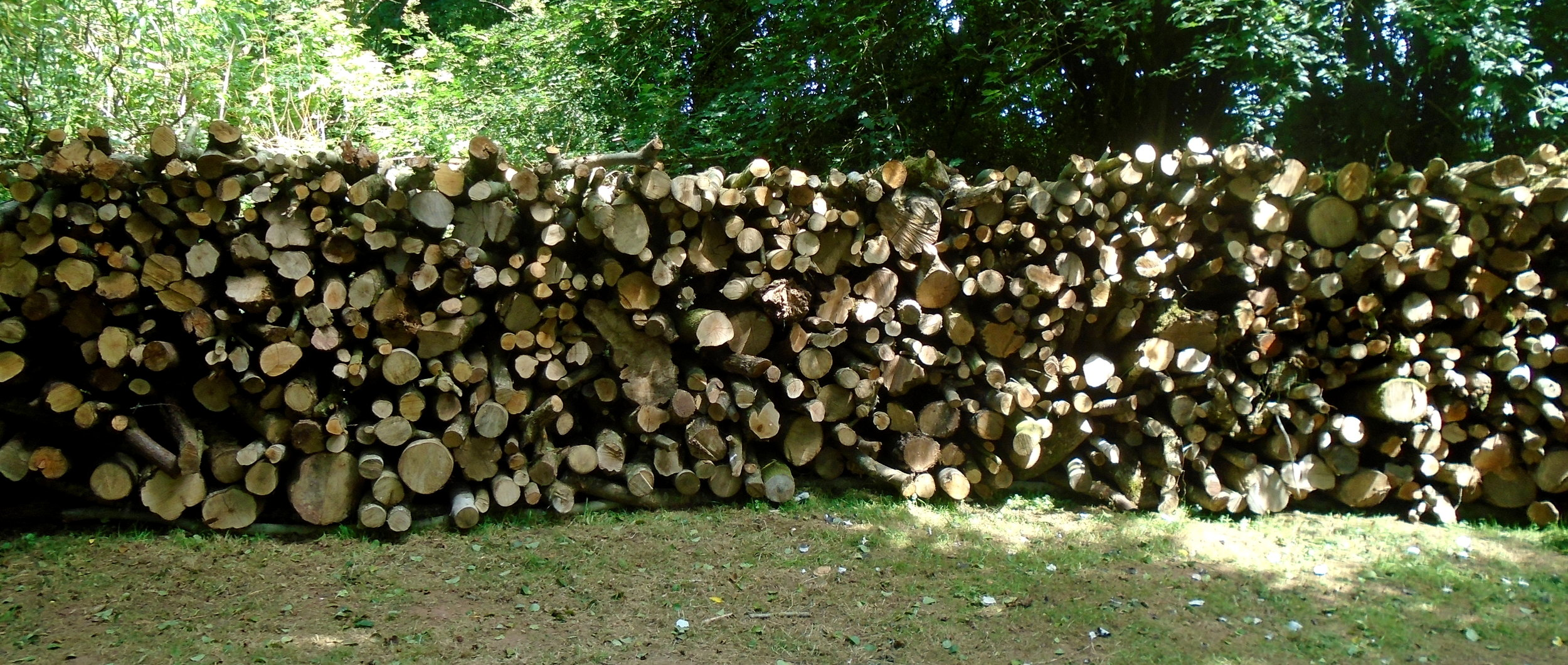 Firewood cords ready for processing.