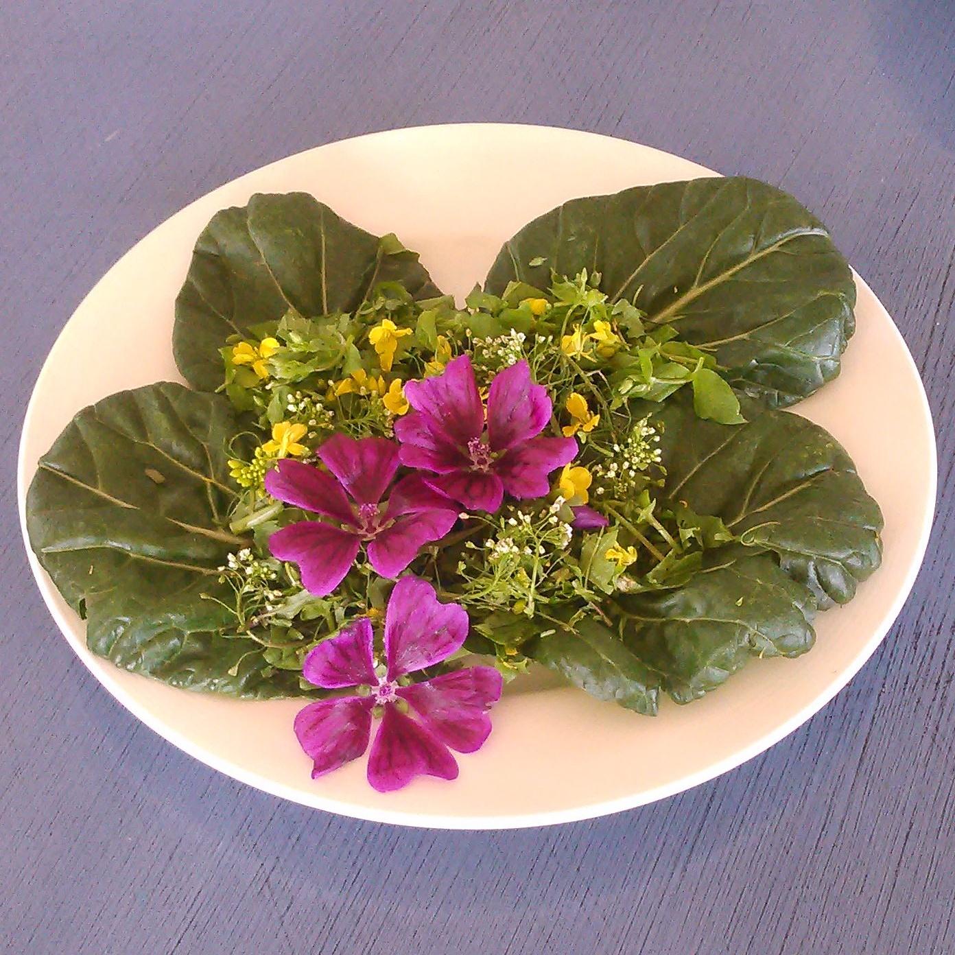 dagens salat består av asiatiske salater, ruccola, namenia,skvallerkål,vassarve og gjetertaske. Blomster av de samme vekstene og kattost på toppen