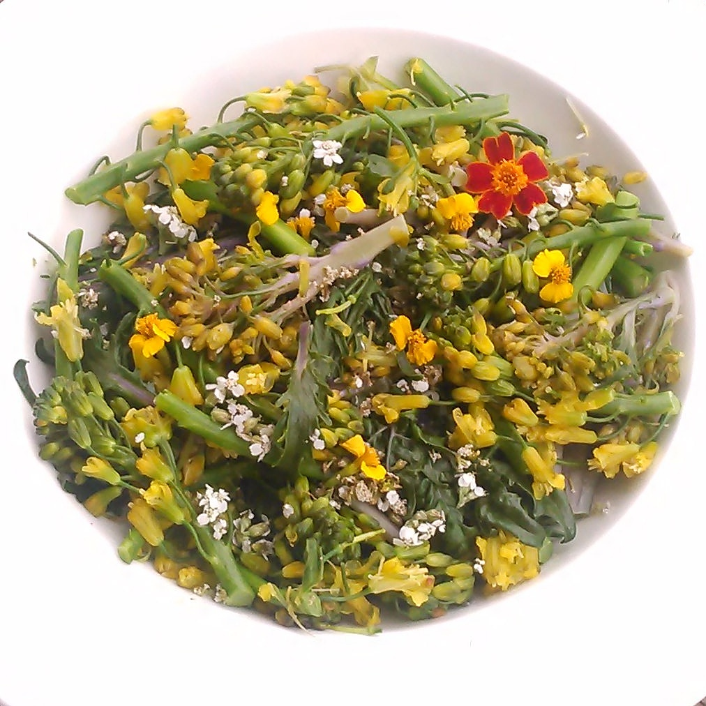 brokkoli blomster servert med blomster av ryllik, mexikansk estragon og krydd tagetes