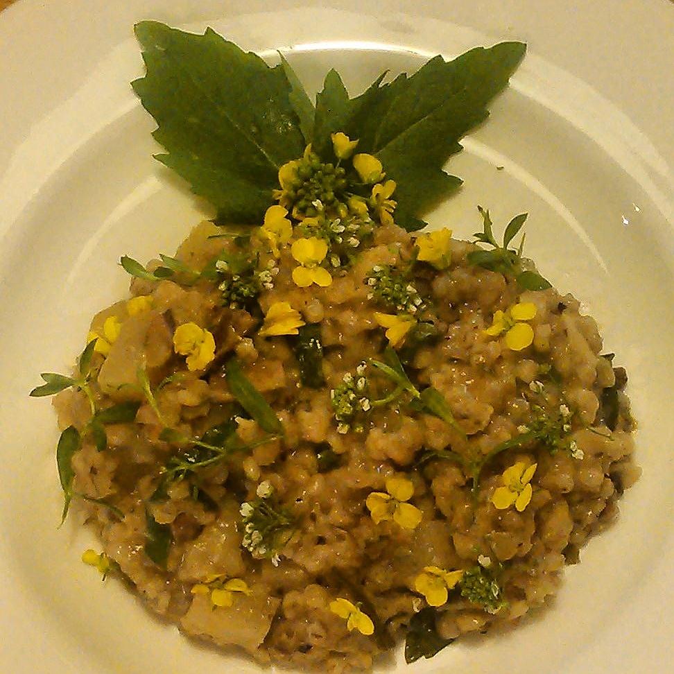 """Den lokale """"risottoen"""" er idag en byggotto med litt grønnsaker, tørket steinsopp, groblad og grobladfrø og spiseligeblomster av gjetertaske toppen"""