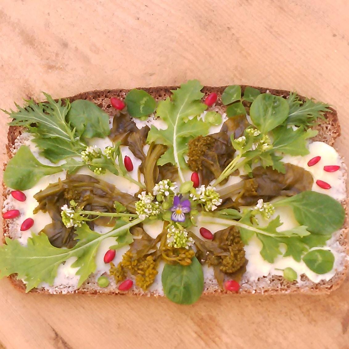 Fortiden møter nåtiden på dagens surdeigsspelt brødskive. Melkesyregjæret vinterkarse fra 2014 ! Nyhøstet namenia, ruccola og tatsoi salat,berberis bær, pengeurt, gjetertaske, kløverblader og en nattogdag blomst