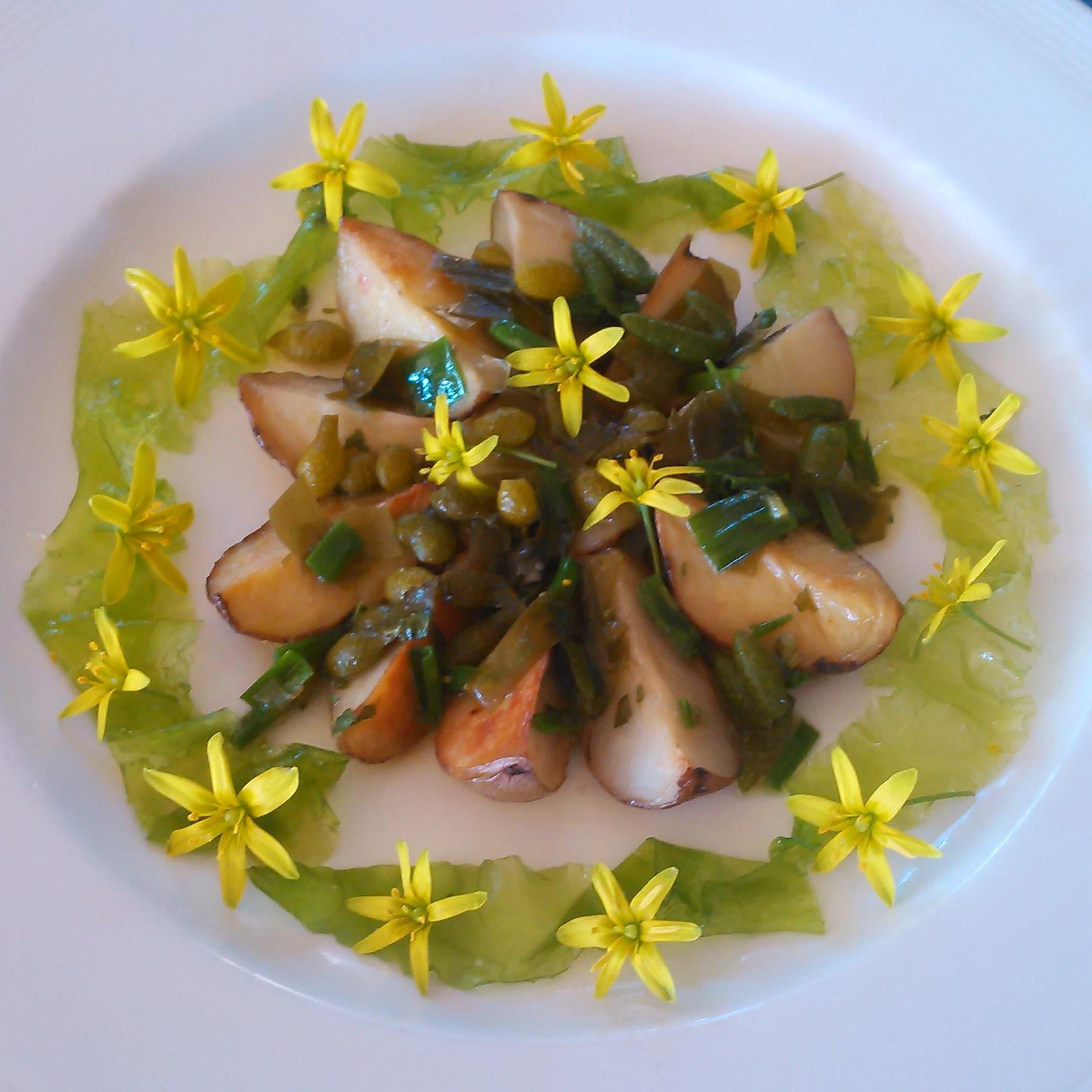 Smørdampet blader av gullstjerne, sukkertang, vingetang, blærer av grisetang og blæretang servert på toppen av poteter av sortene Pimpernell, Beate, Kerrspink og Peik. Rundt det hele ligger sjøsalat og blomster av gullstjerne.