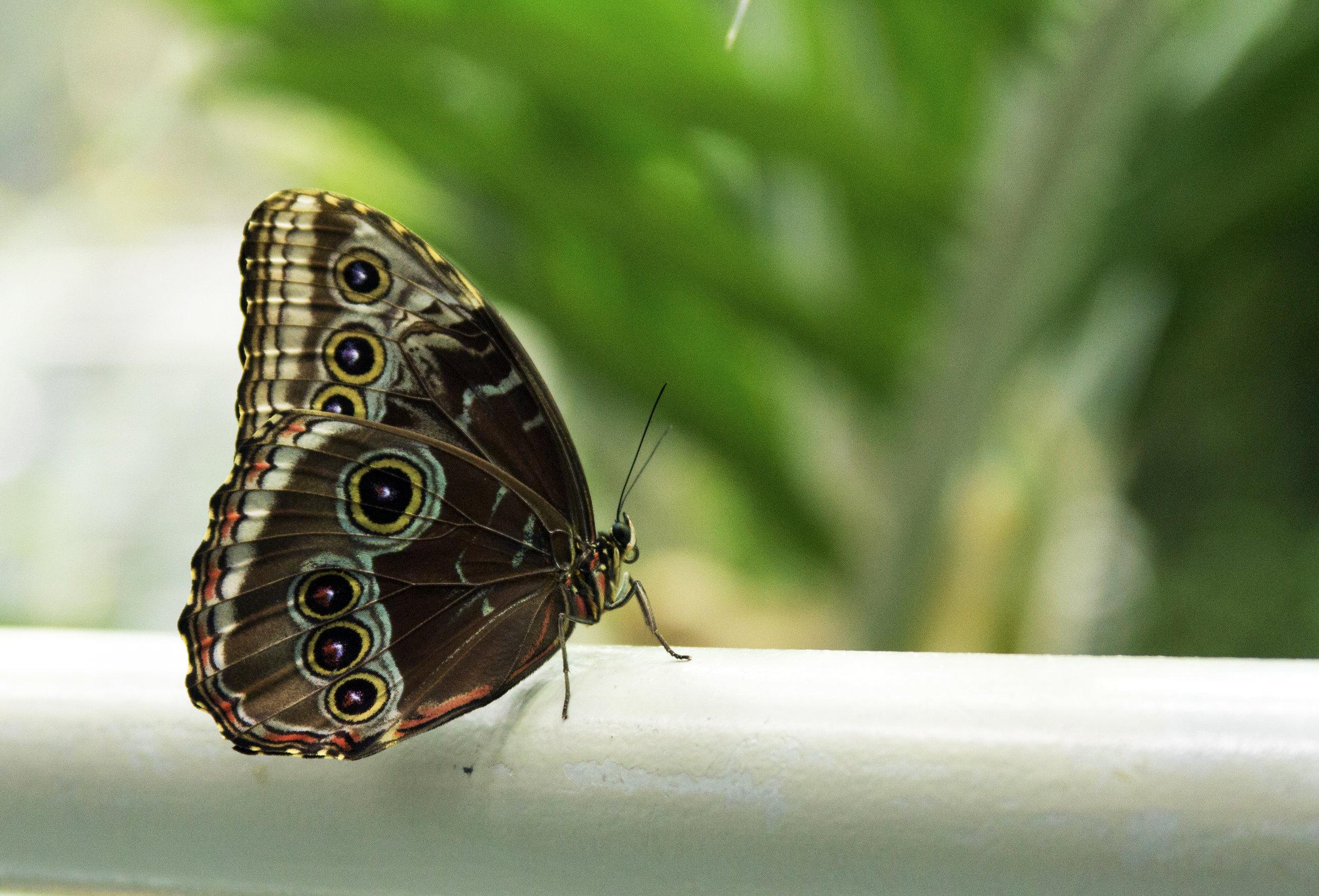 cal-academy-butterfly.jpg