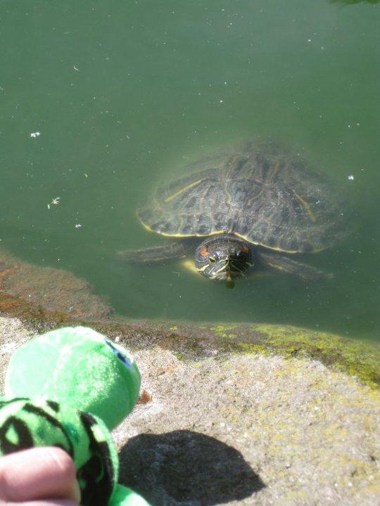 joshie-turtle-staredown.jpg