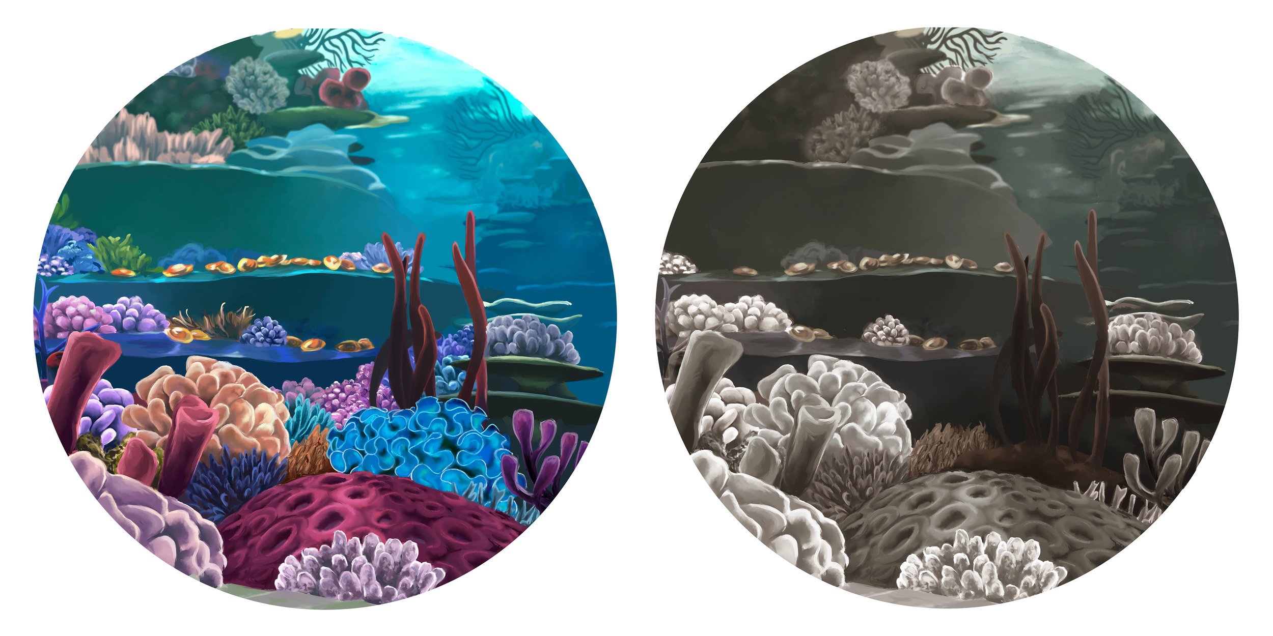 coral_combined.jpg