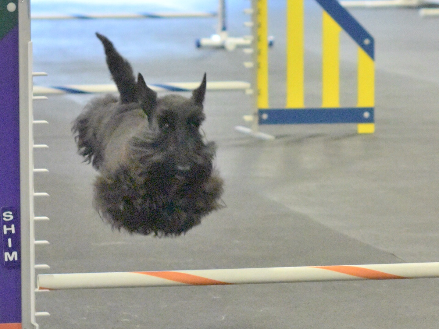 scottie mid jump.jpg