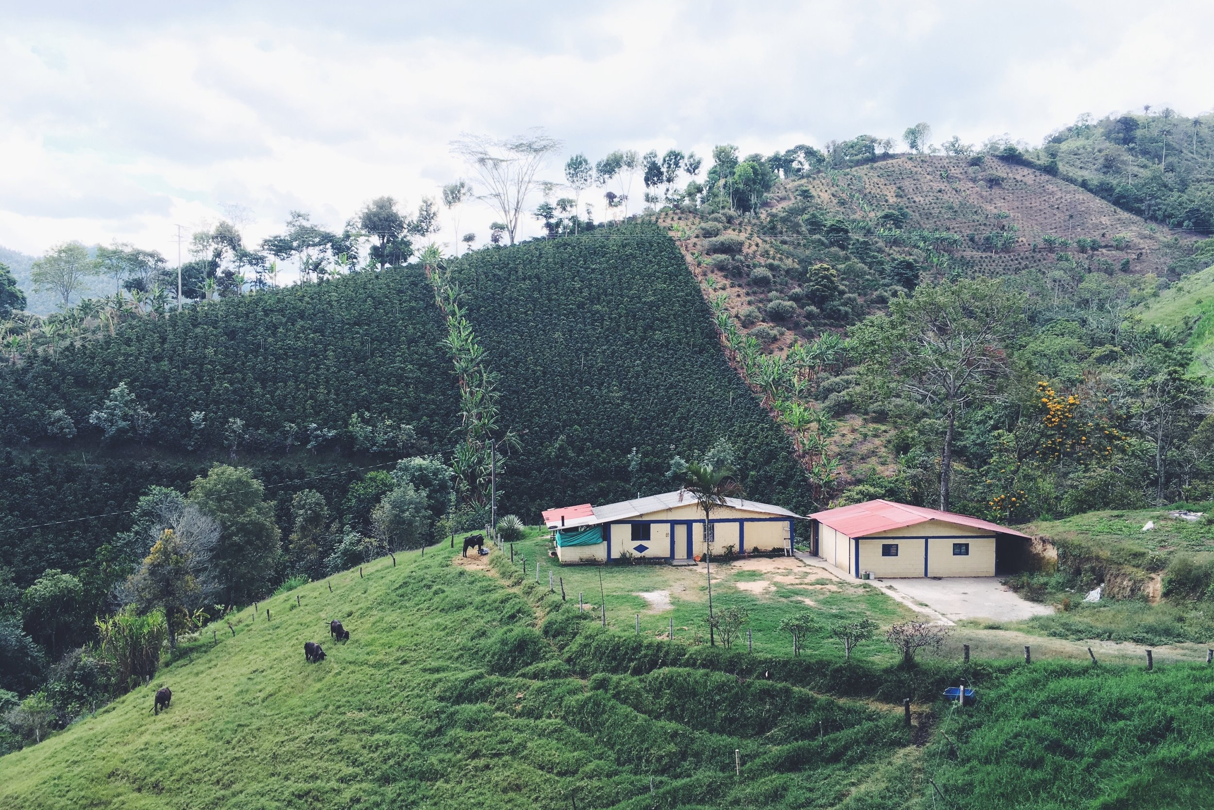 Obelo Coffee farm