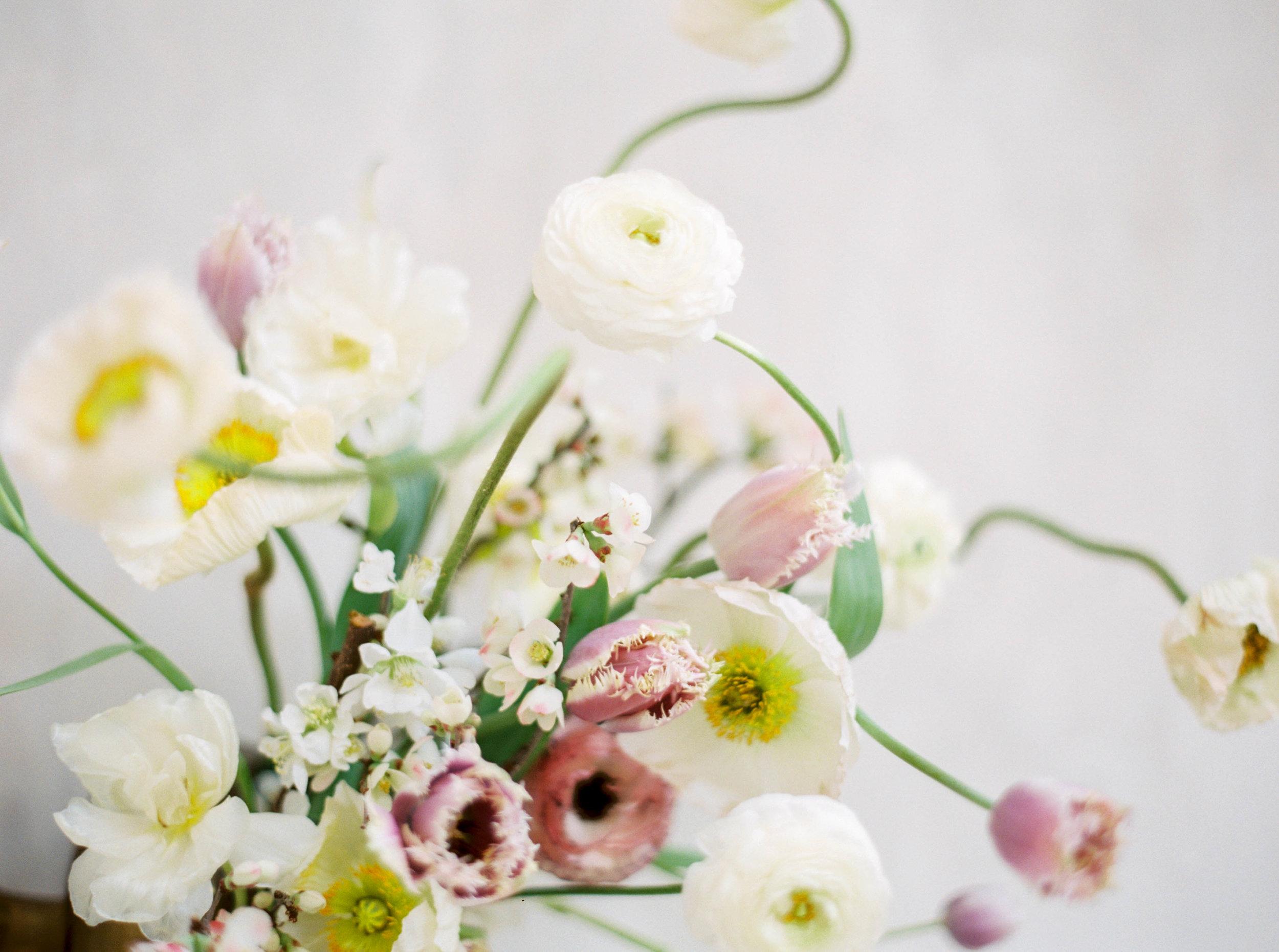 Evergreen-boop-Jenna-Powers-Photography-9.jpg