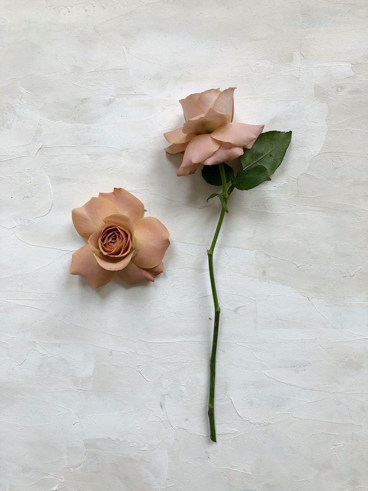 Cappuccino Rose