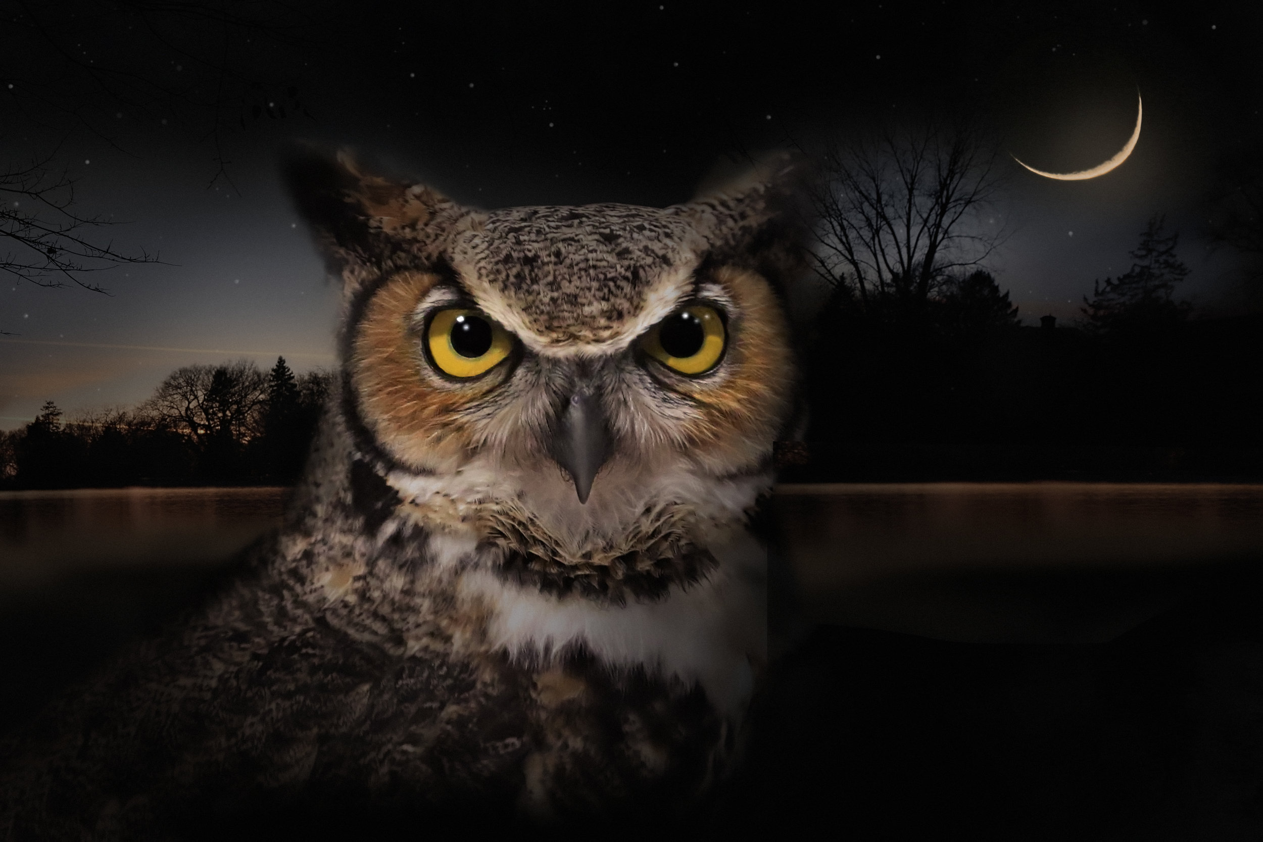 Great Horned Owl and Lake Of The Isles.