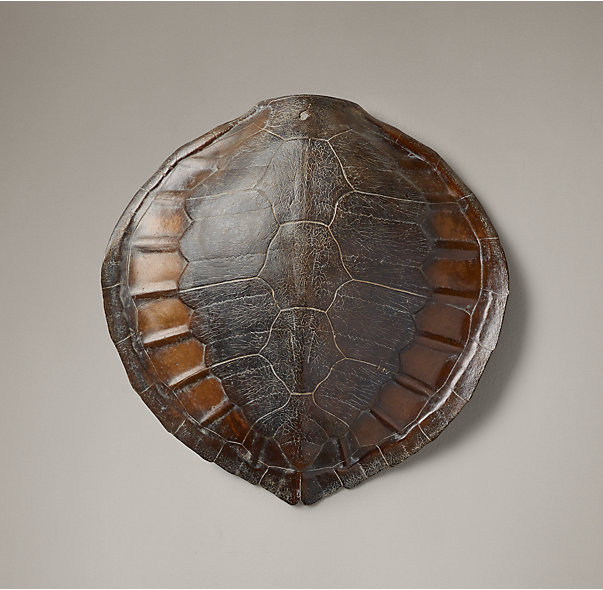 Sea Turtle Shell, $299