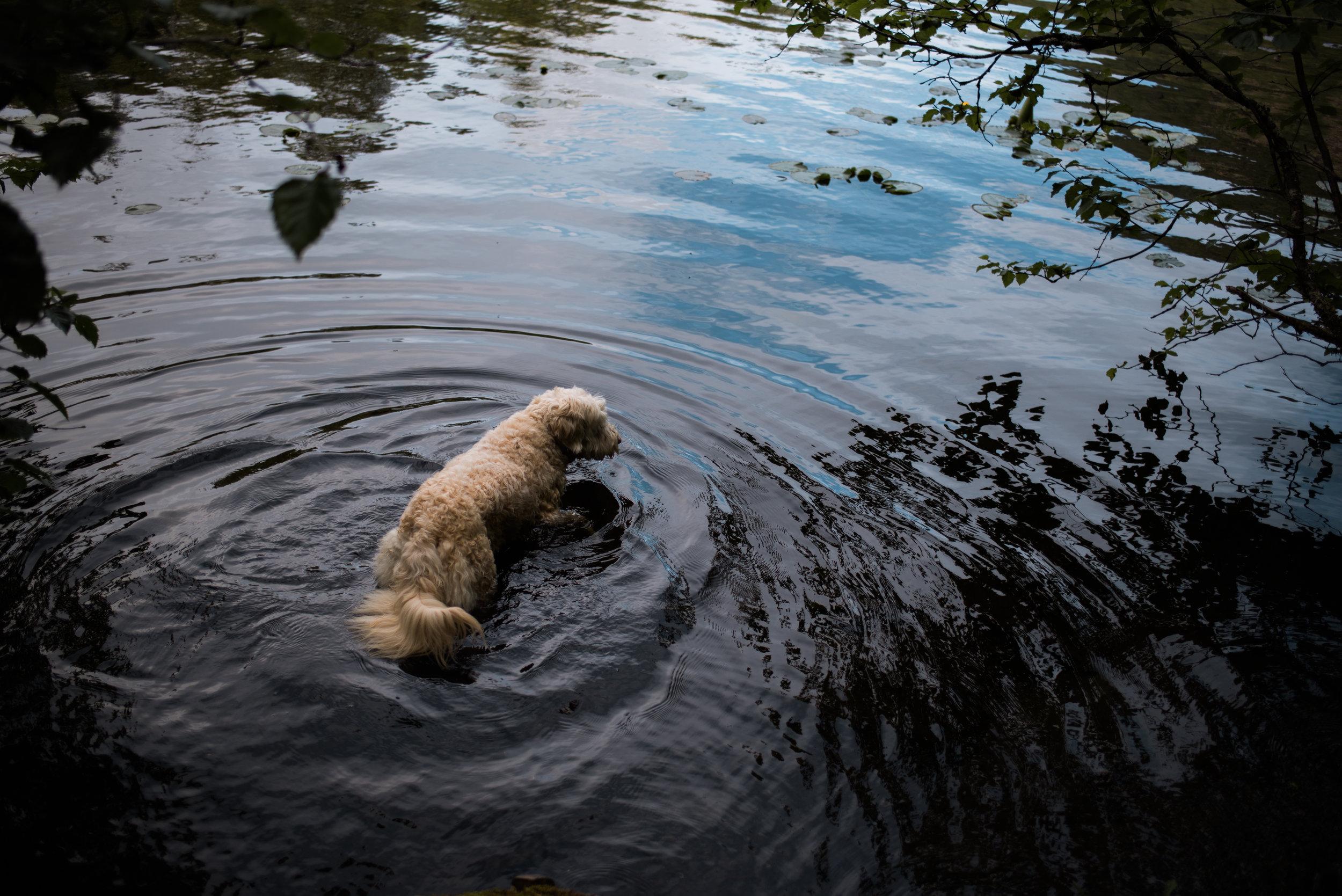 Beaver Lake-9010.jpg