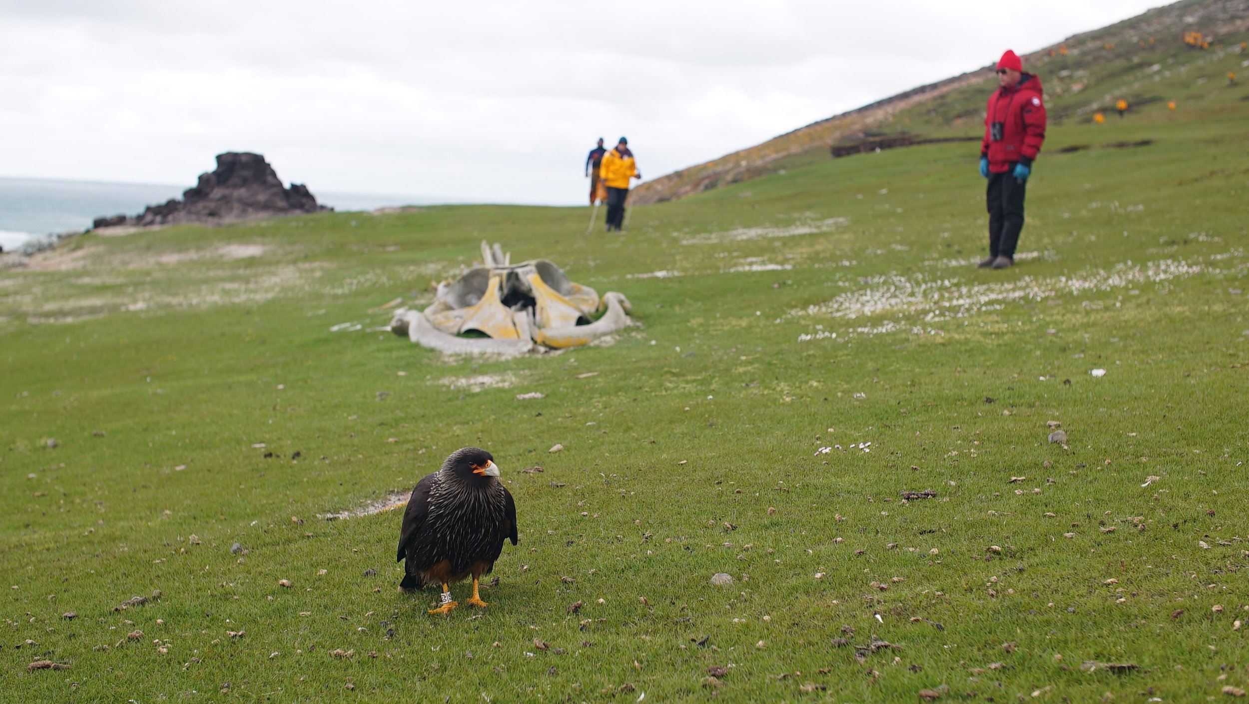 Saunders Island, Falkland Islands