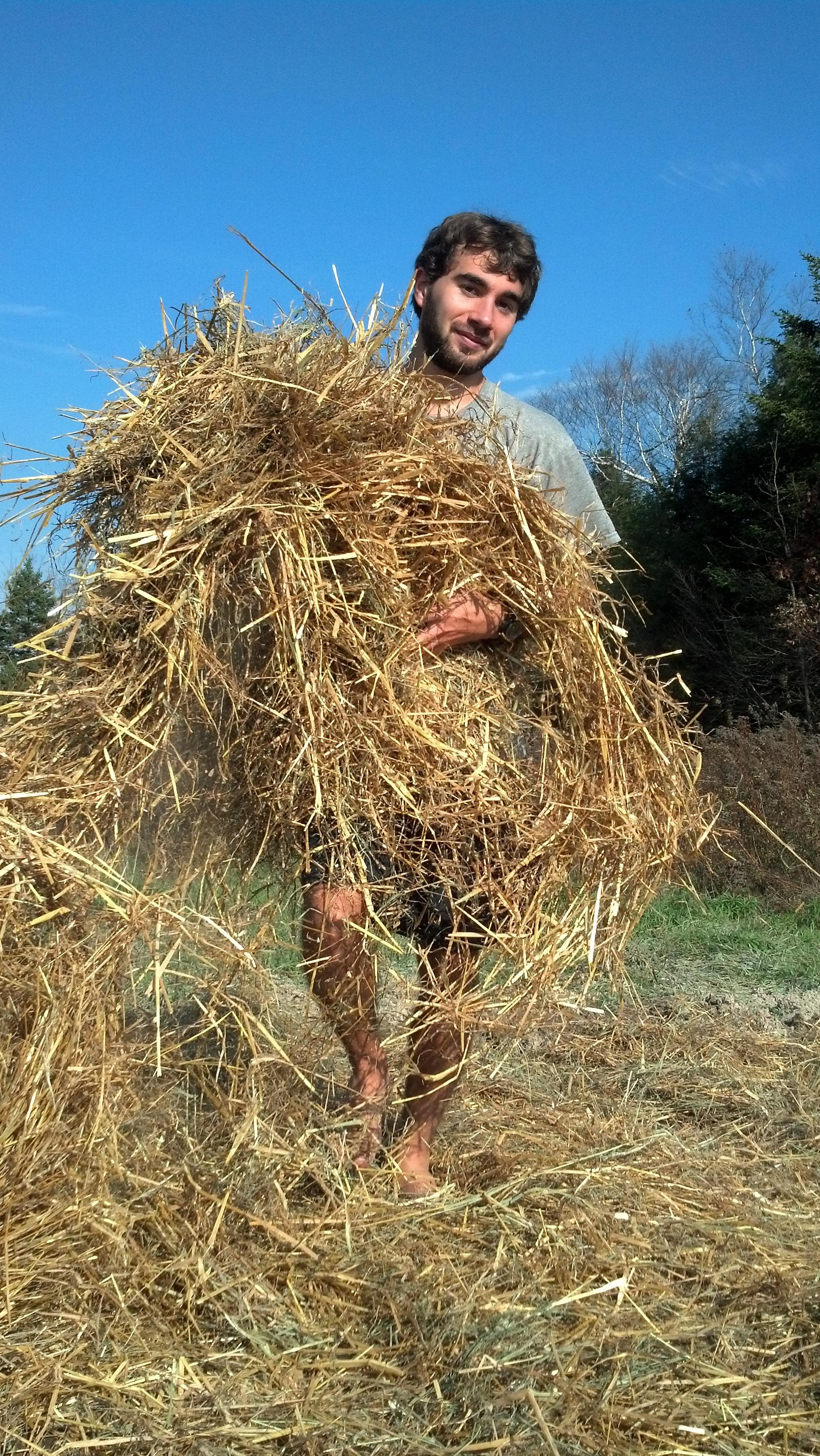 charley, moving hay.jpg