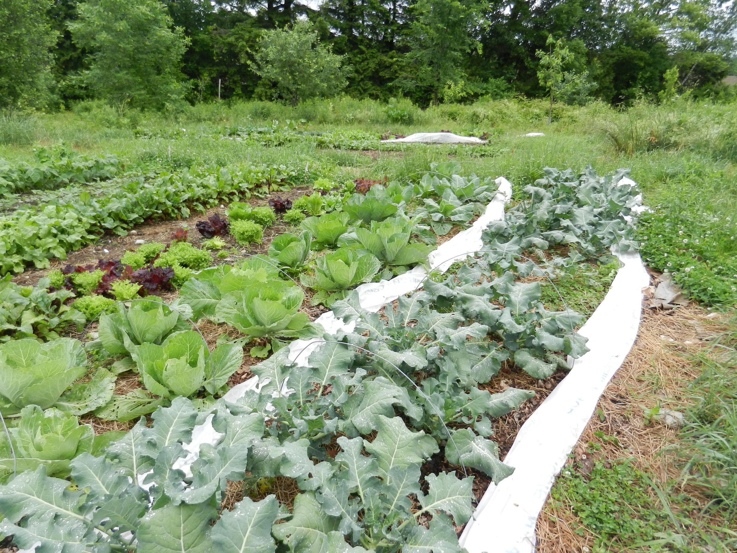 veg plots, no till.JPG