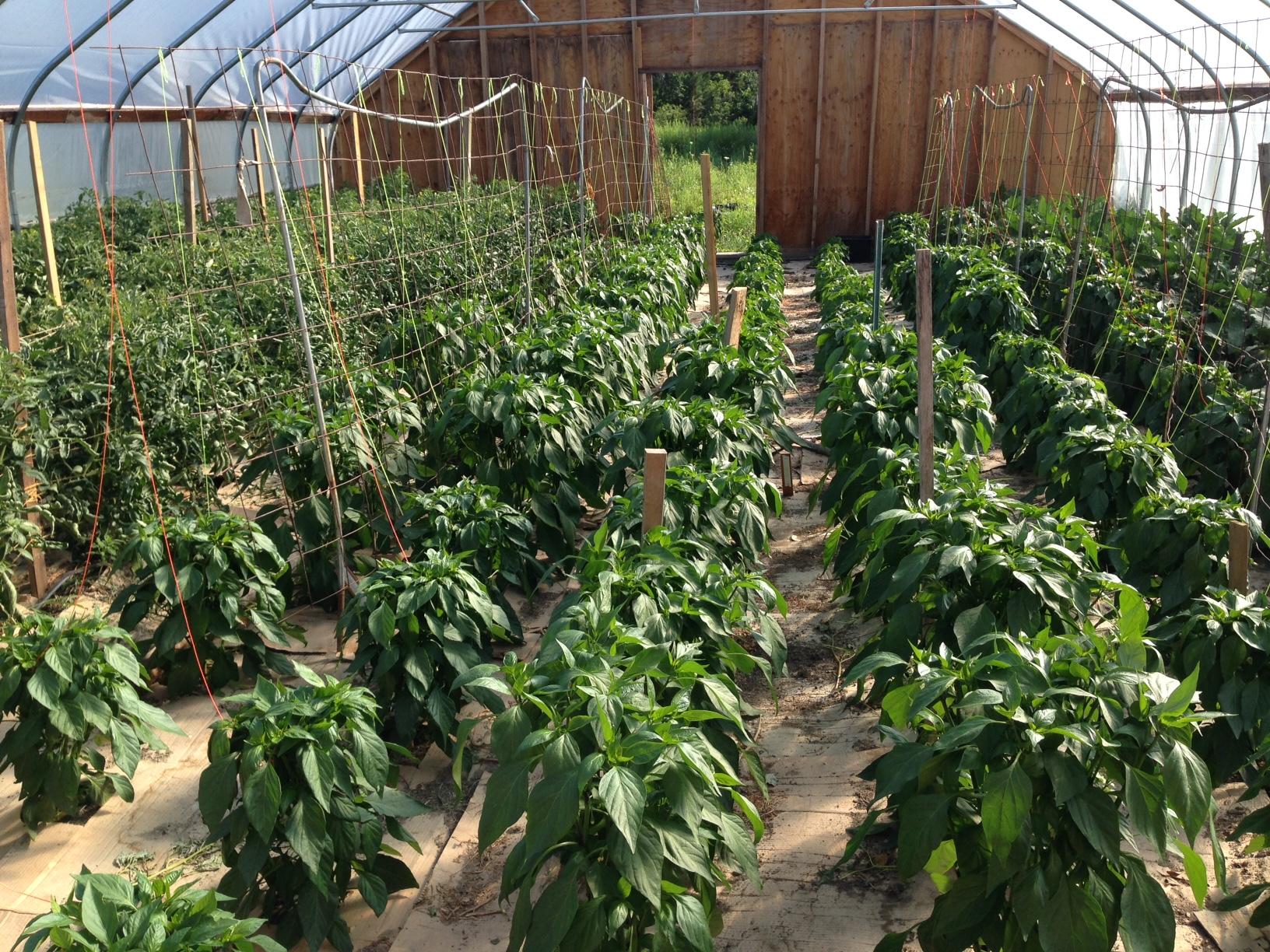 greenhouse image.jpeg