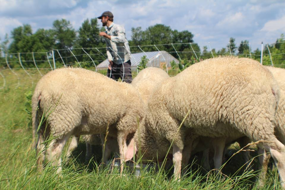 lamb share.jpg