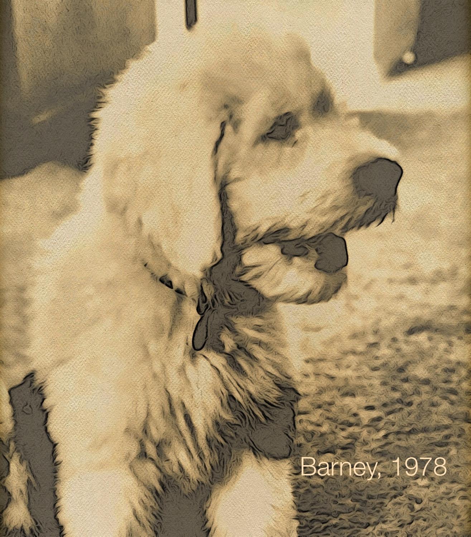 BarneyDog.jpg