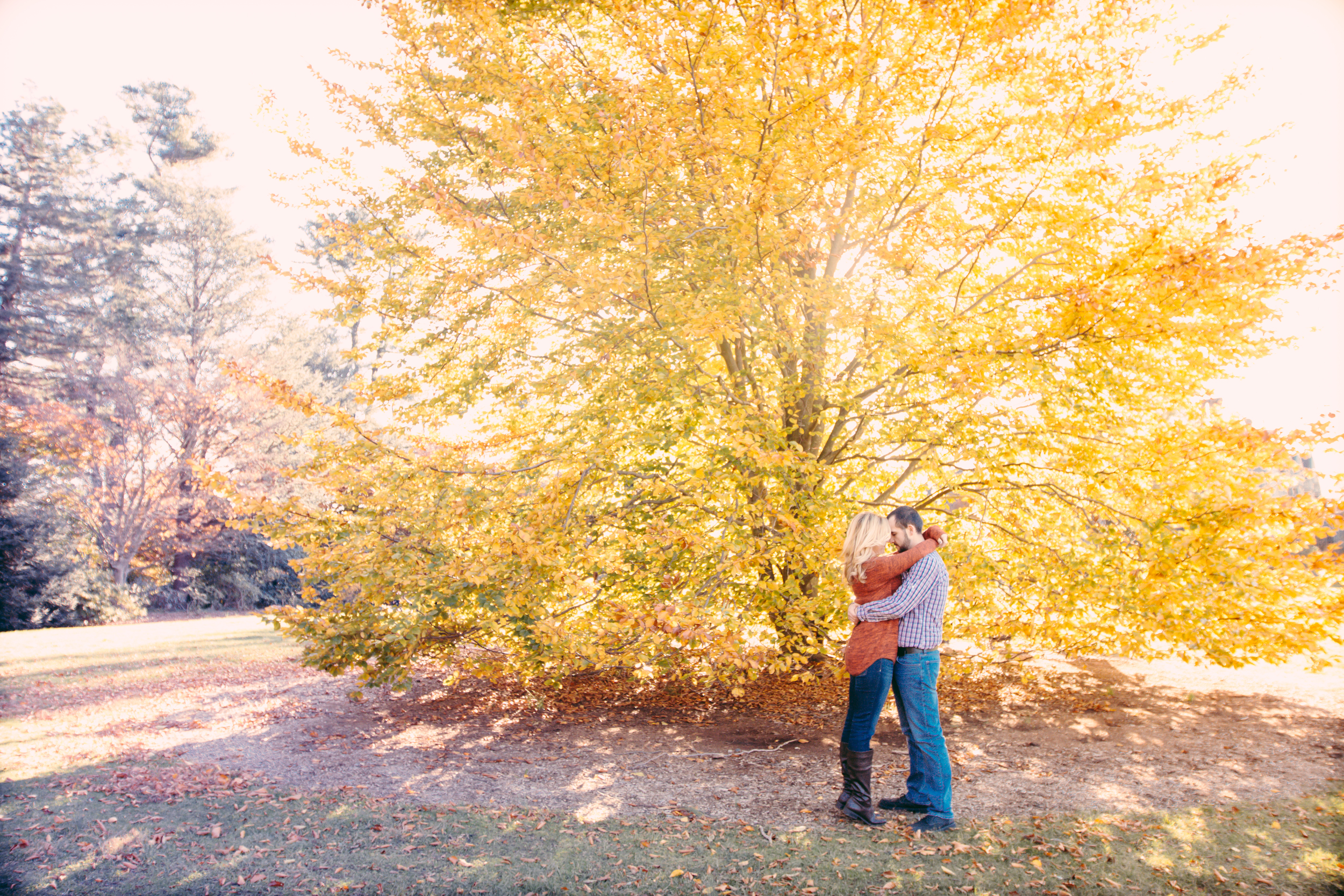 bright yellow tree long island engagement photographers