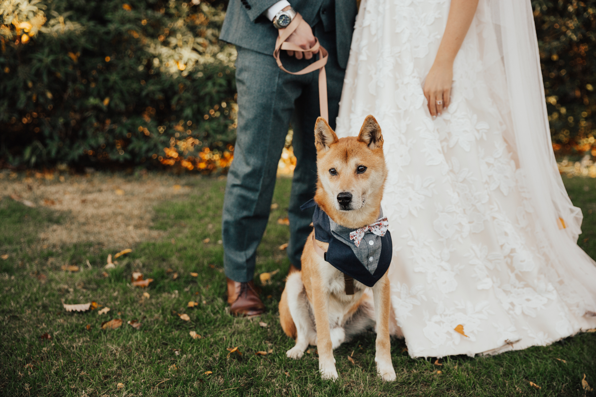 shiba wedding dog