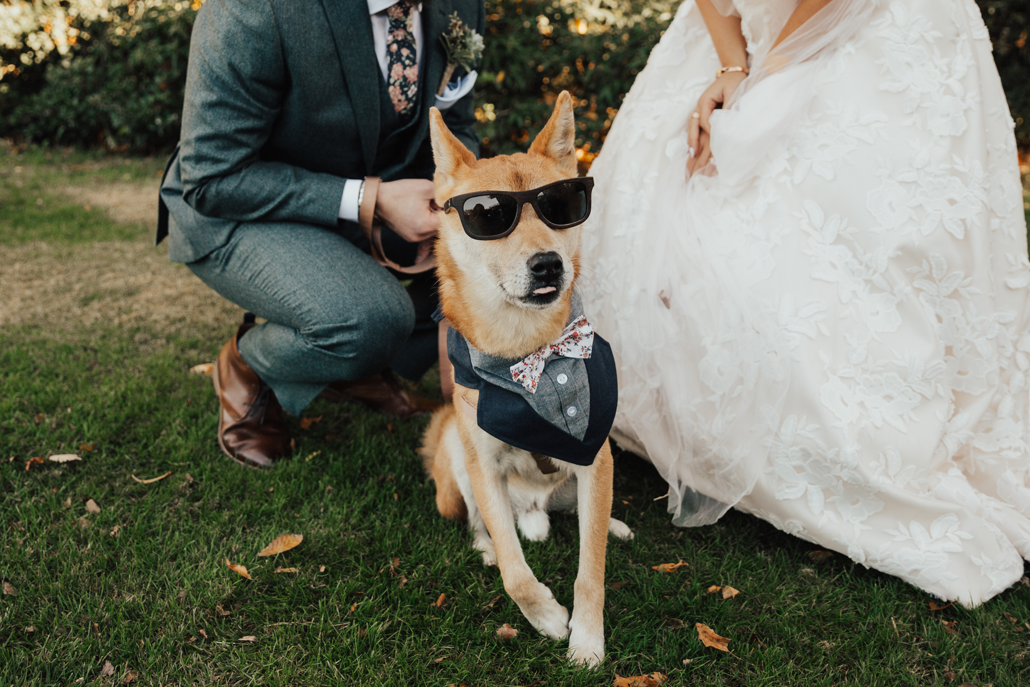 cool dog wedding