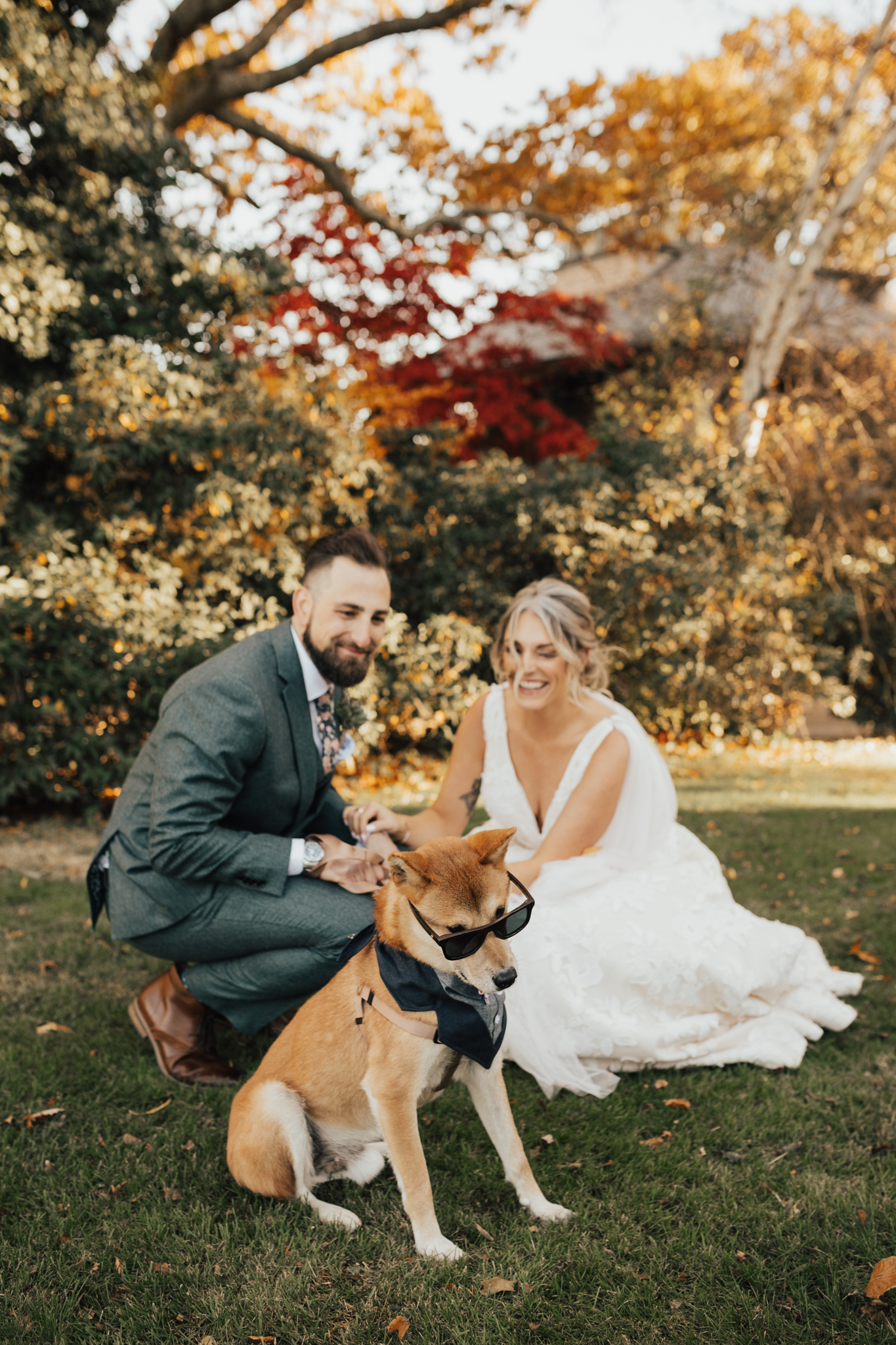 funny dog wedding pictures