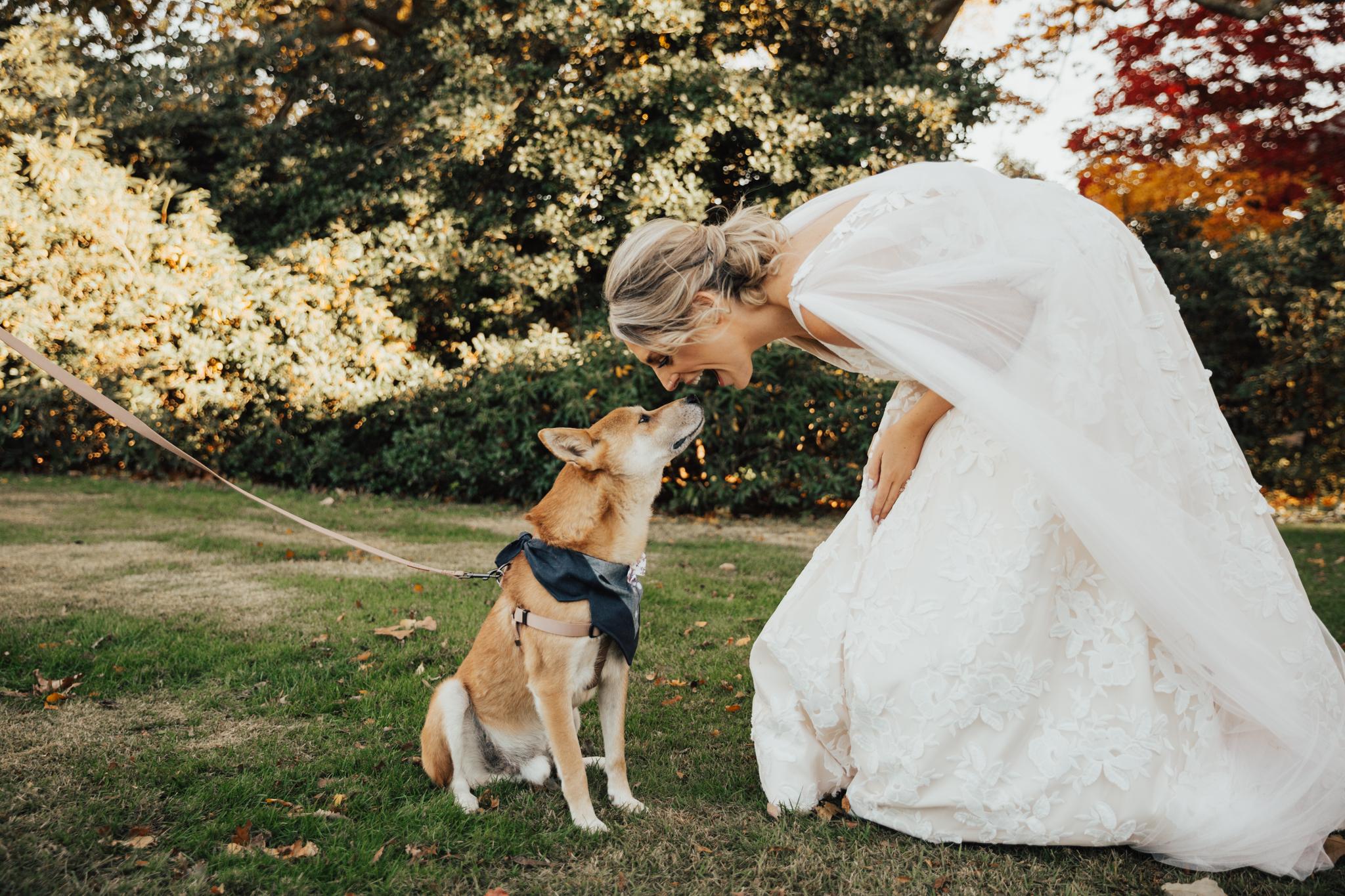 dog with bride wedding day