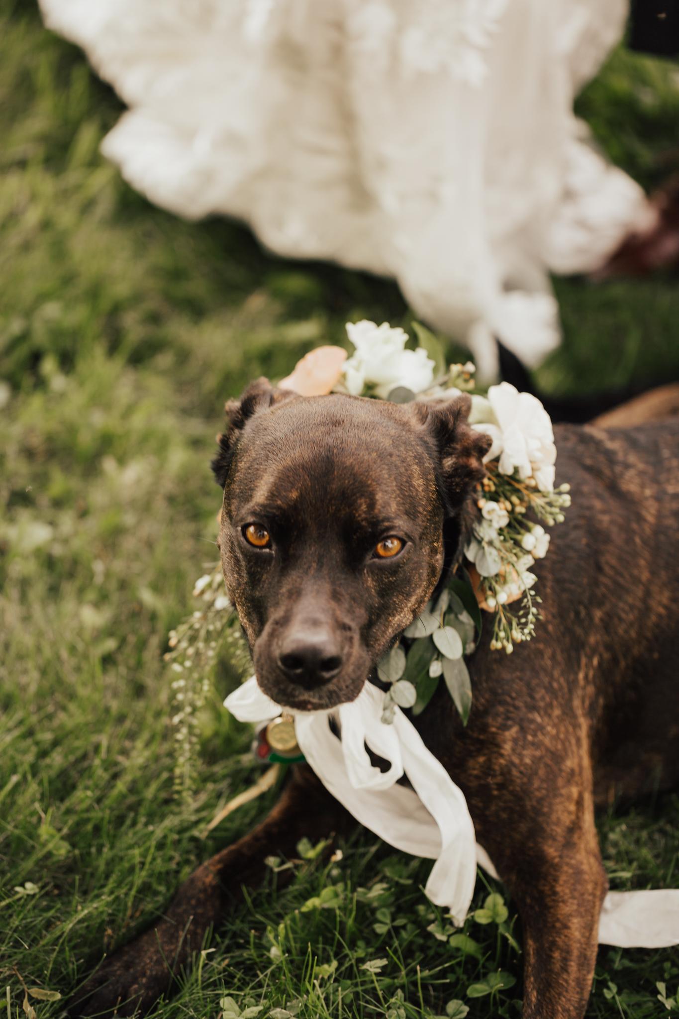 audreys_farmhouse_wedding-62.jpg