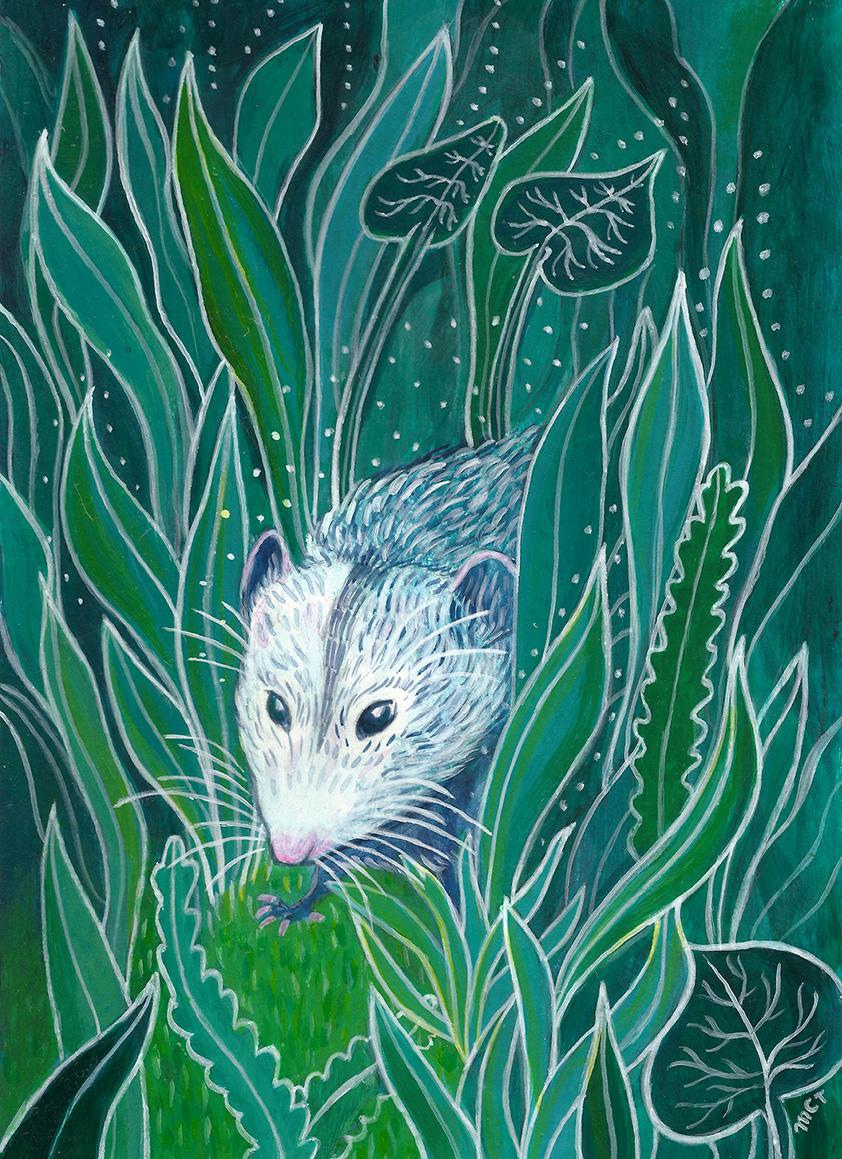 Opossum Magic